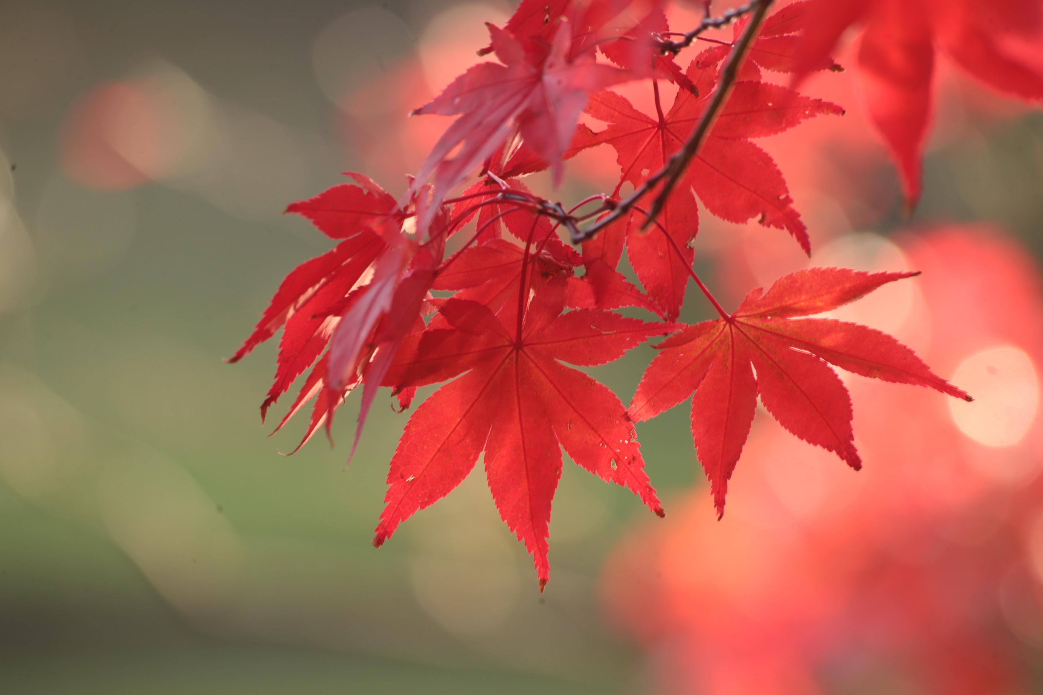 первой осенние картинки красные один номер производится