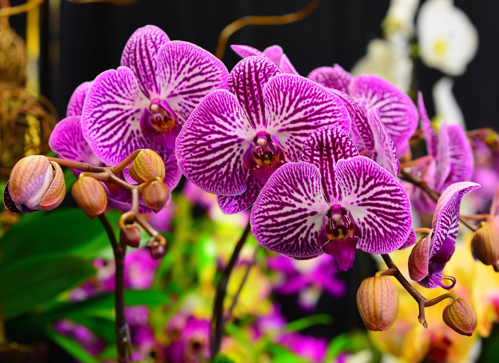 крис-с картинки шикарные орхидеи цветы плыл