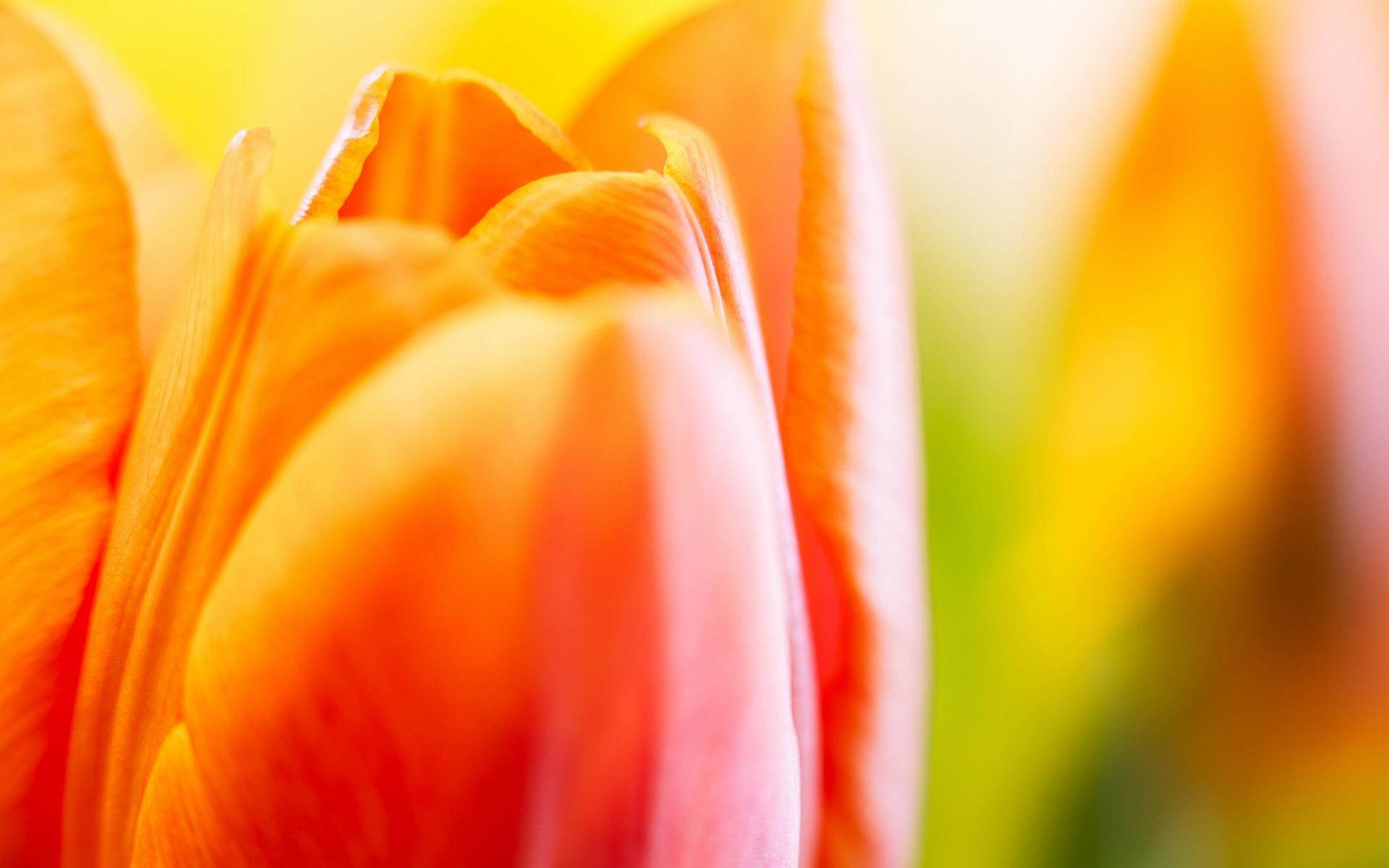 тюльпаны краски скачать