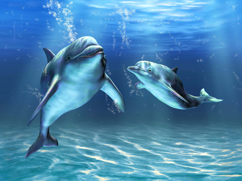 много дельфинов