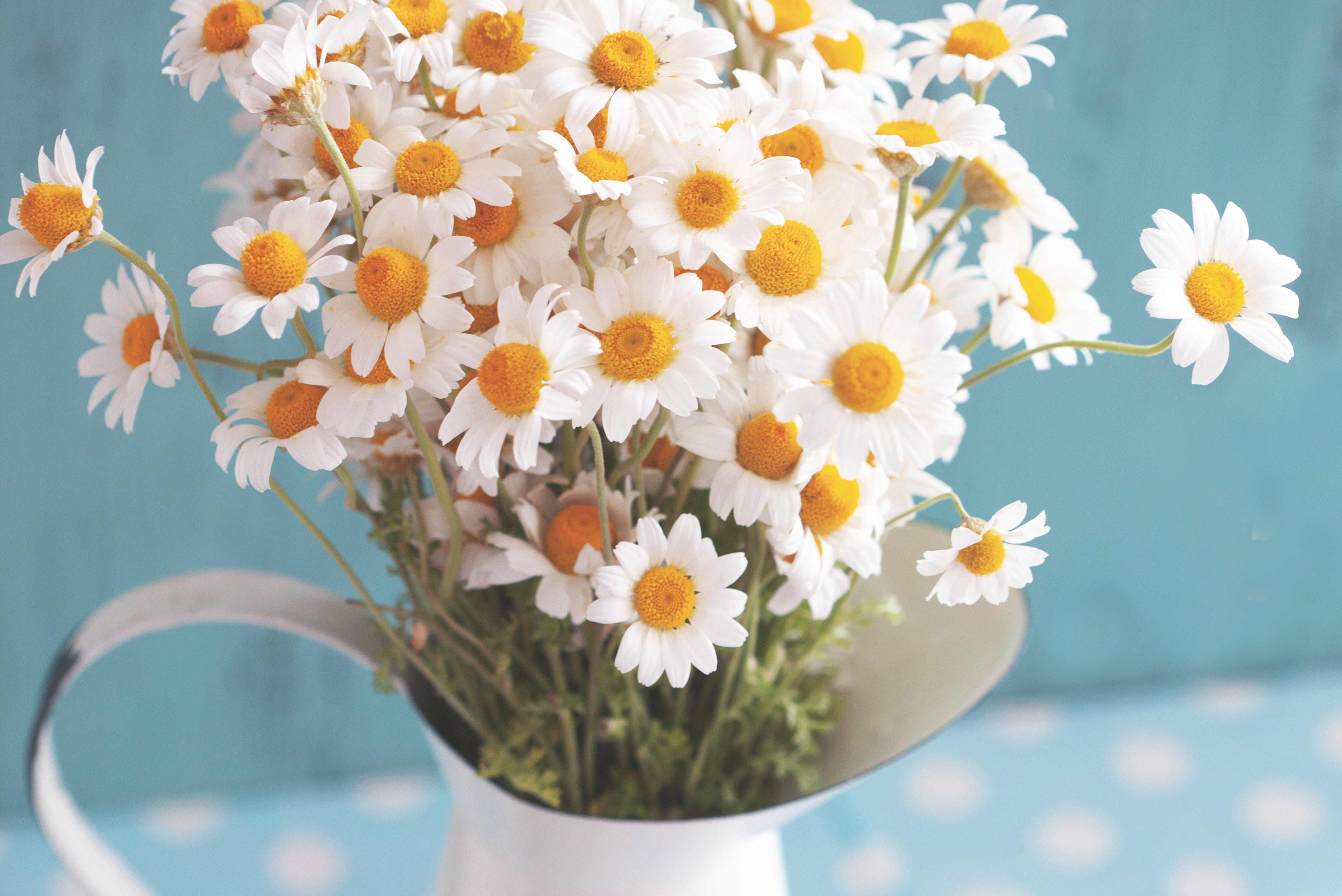 Букет цветов ромашки картинки