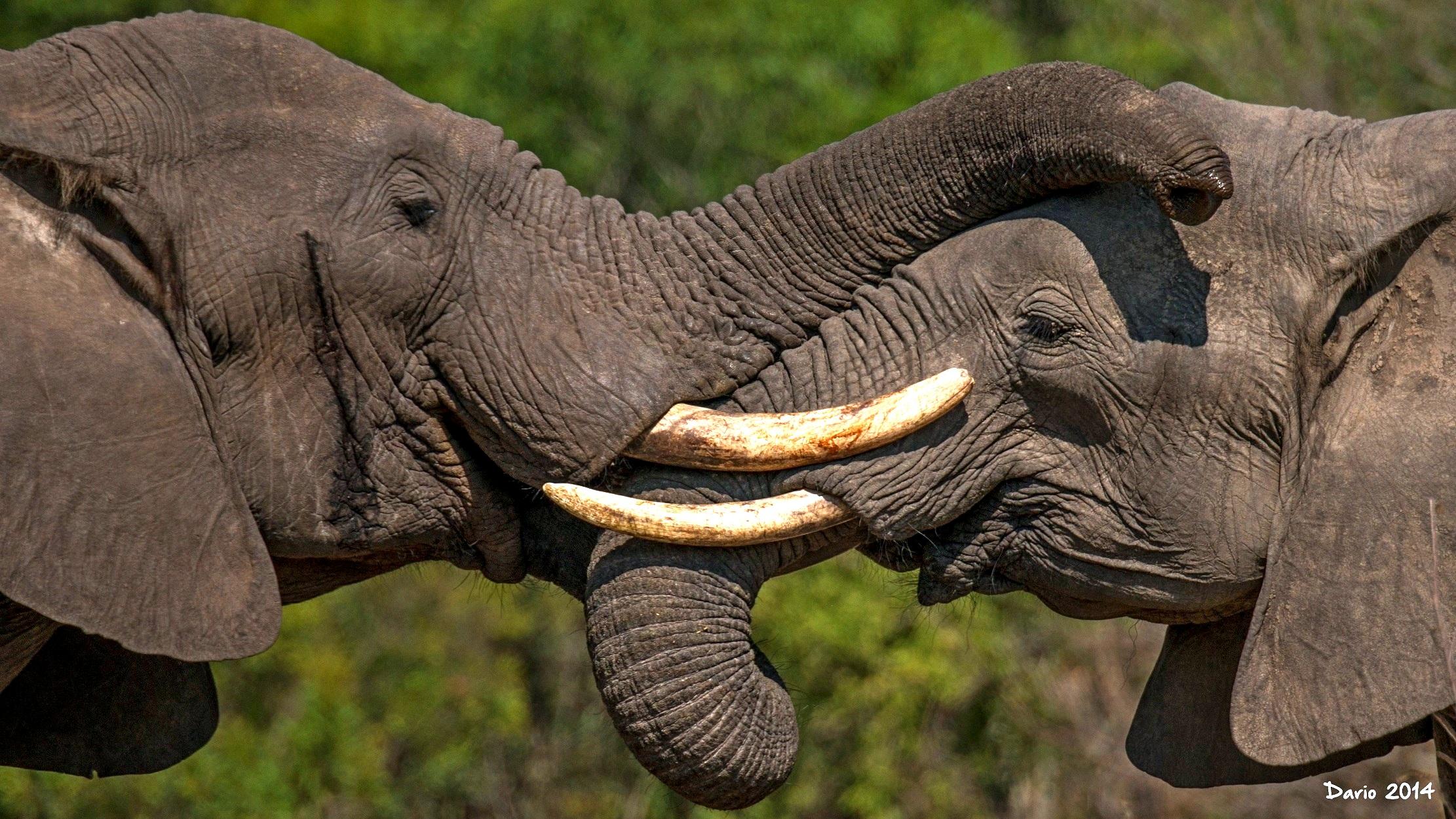 использования картинки слон хобот часто