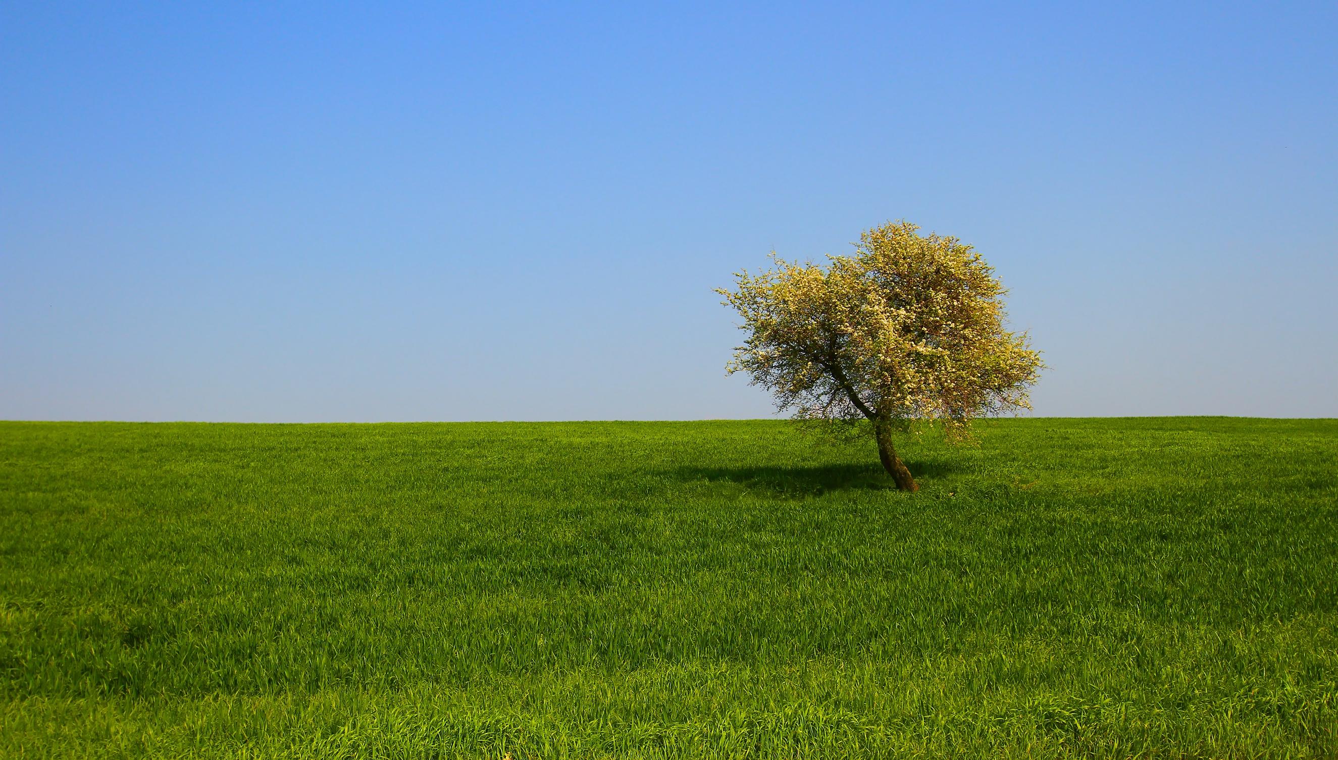 блондинка дерево поле blonde tree field  № 1377173 без смс