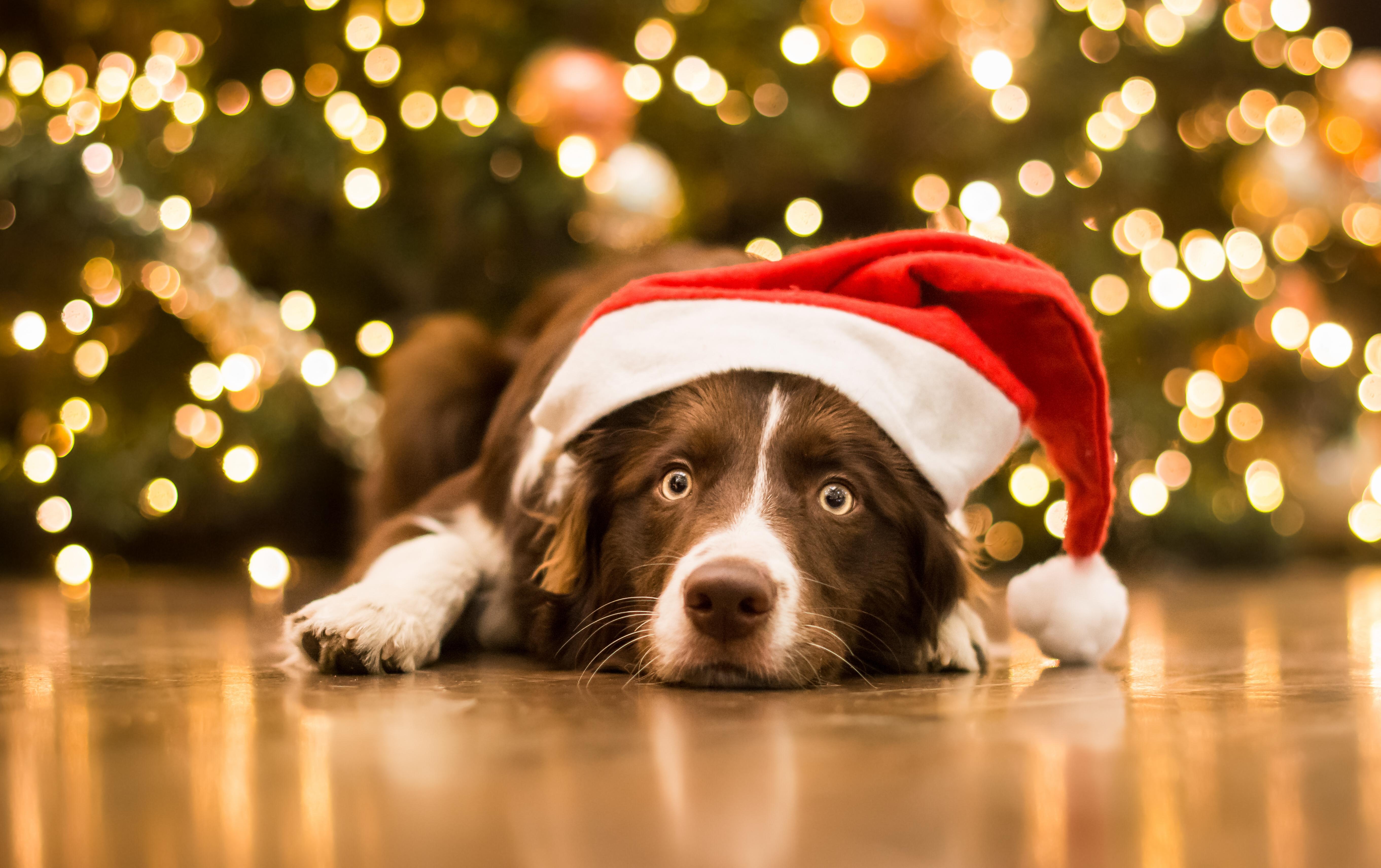 Открытка с собаками на новый год