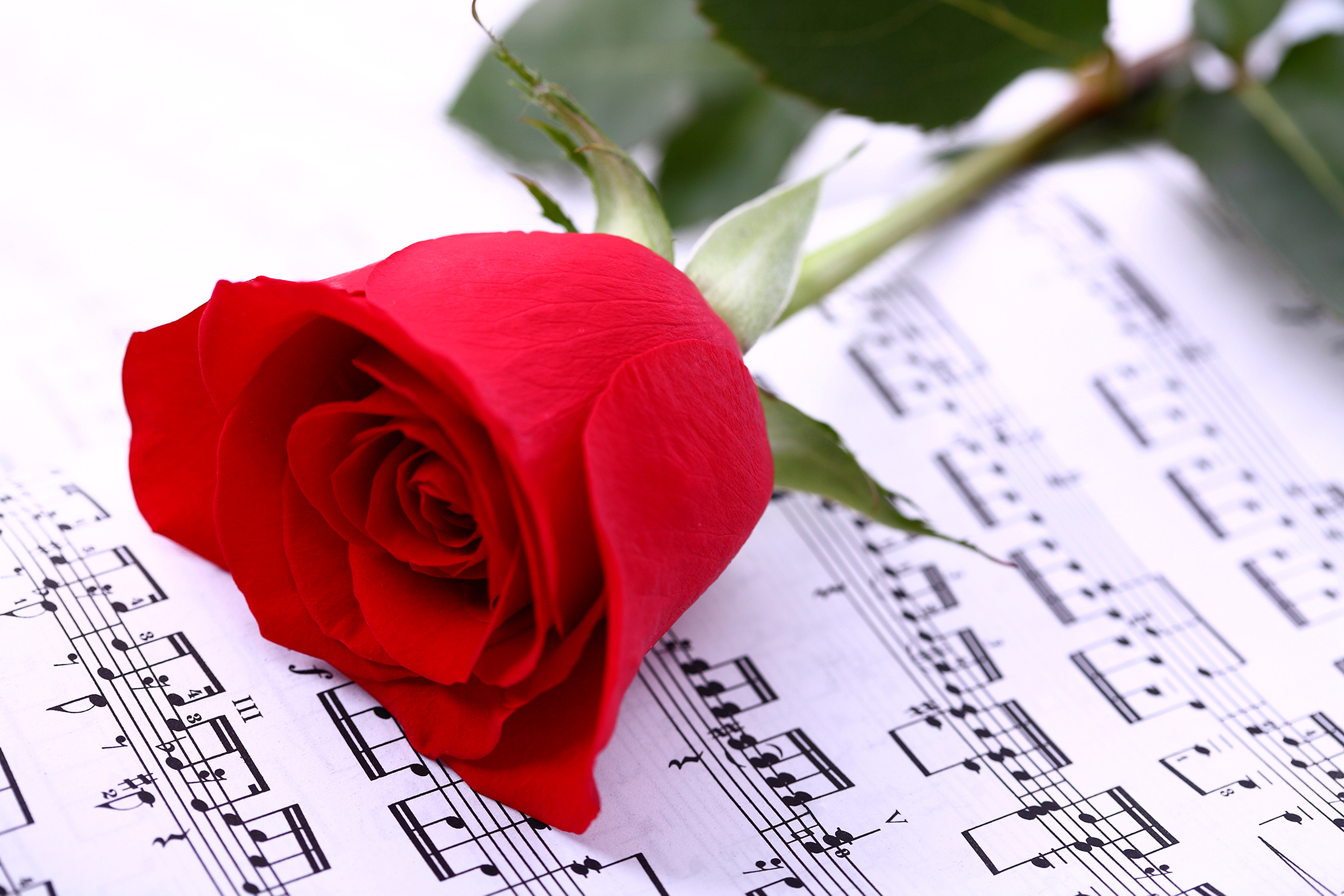 Открытка с розой музыкальная