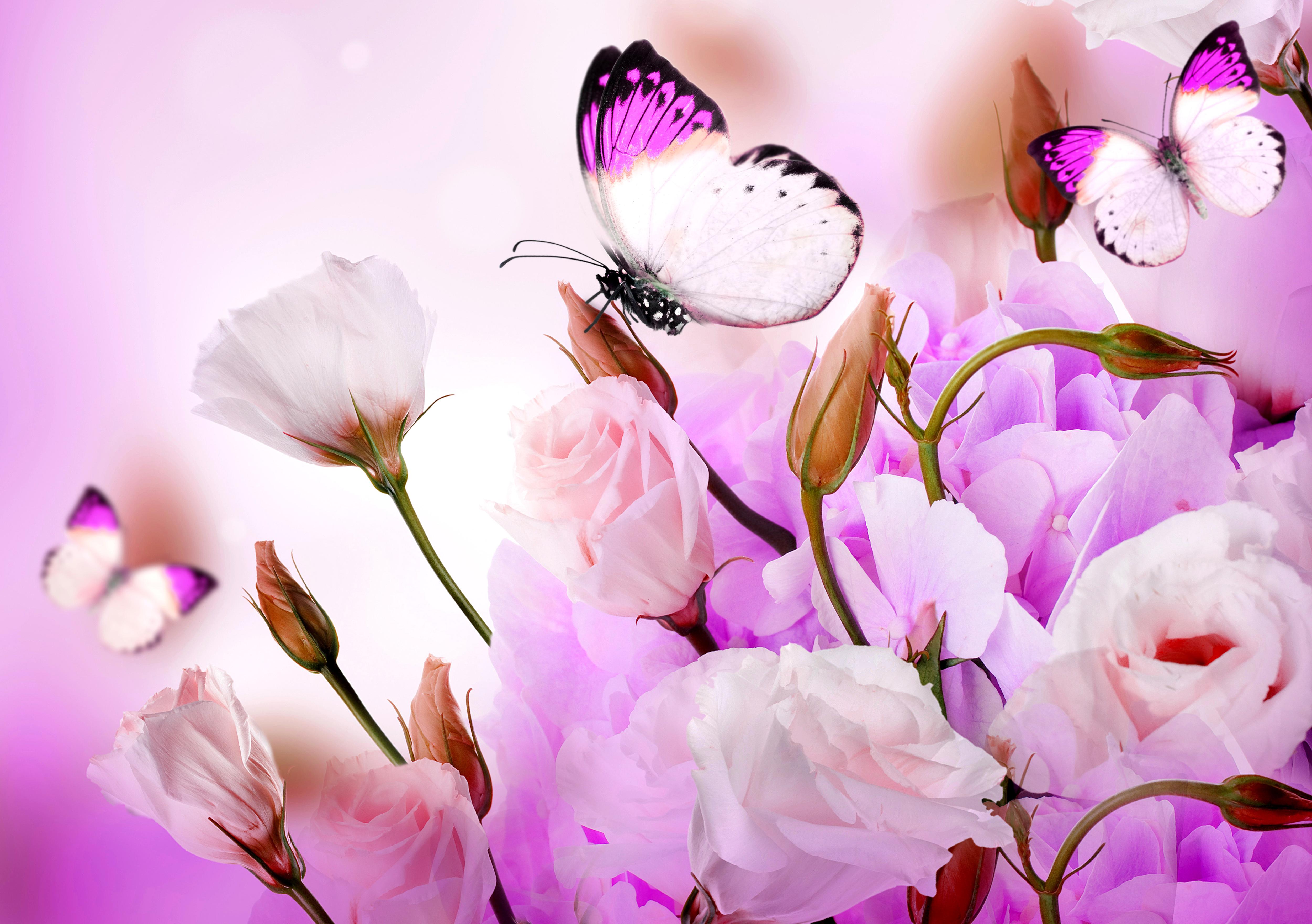бабочки из лепестков  № 2303808  скачать