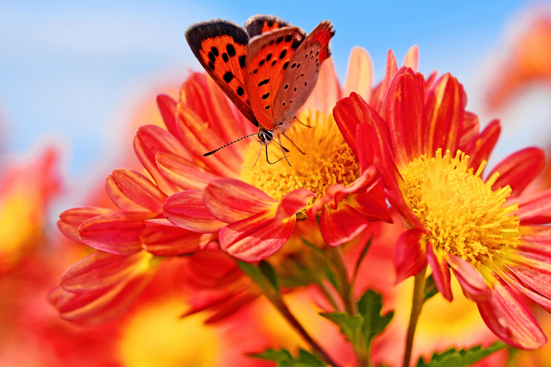 Картинки яркие цветы
