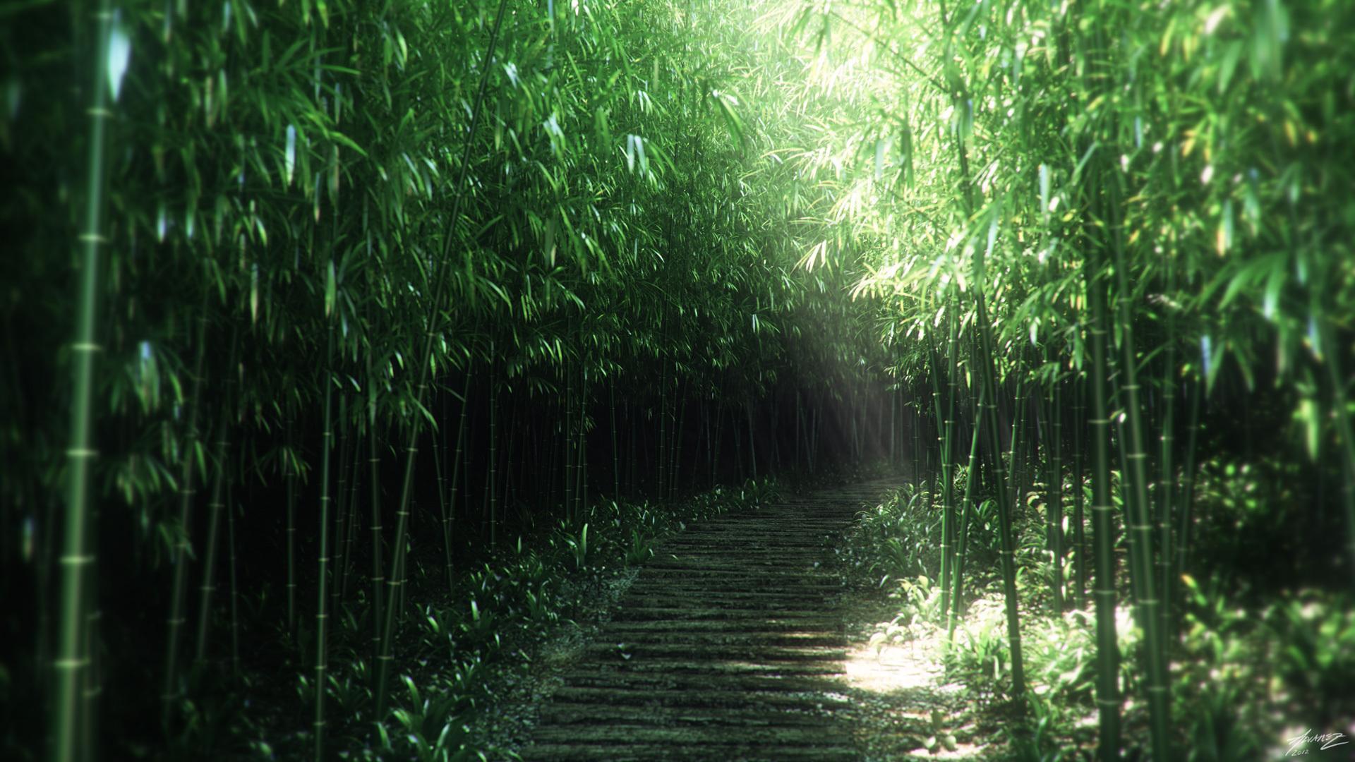 Заросли бамбука бесплатно