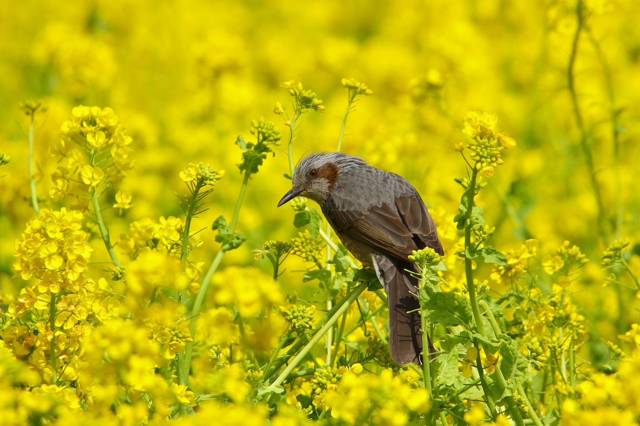 Птички летом картинки