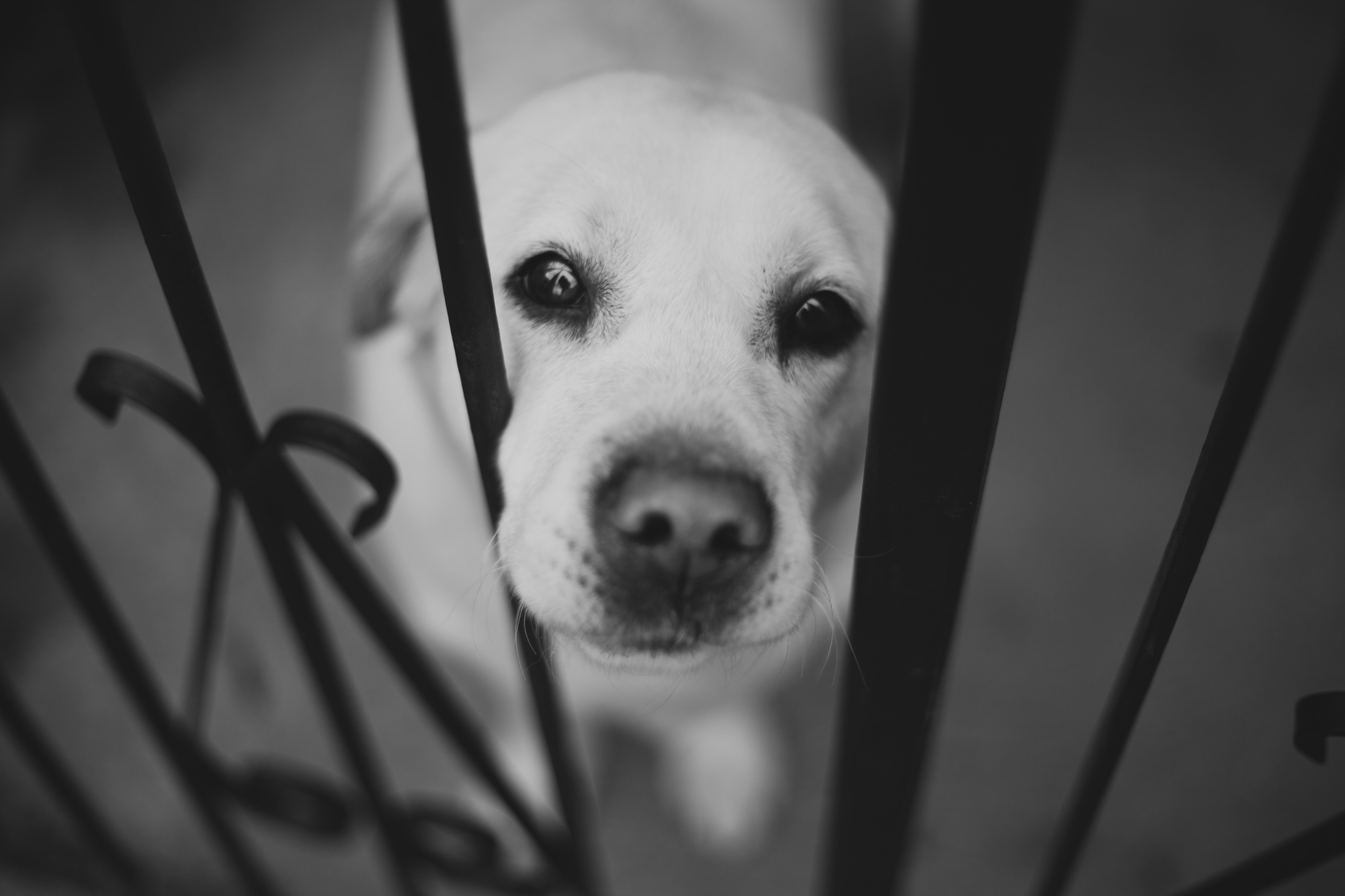 Черно-белый пес на полу  № 1157298 загрузить