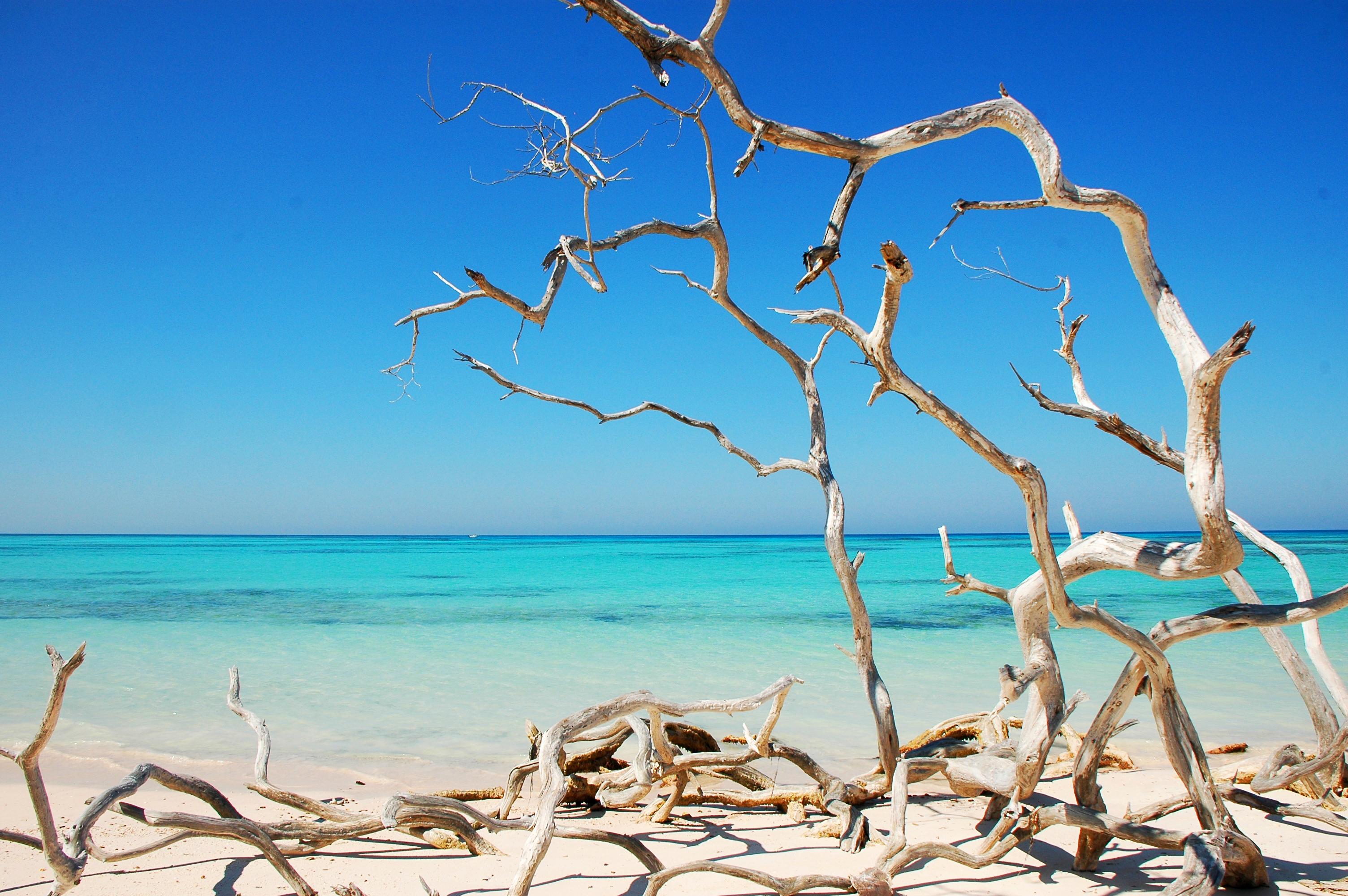 дерево море высота  № 964235  скачать