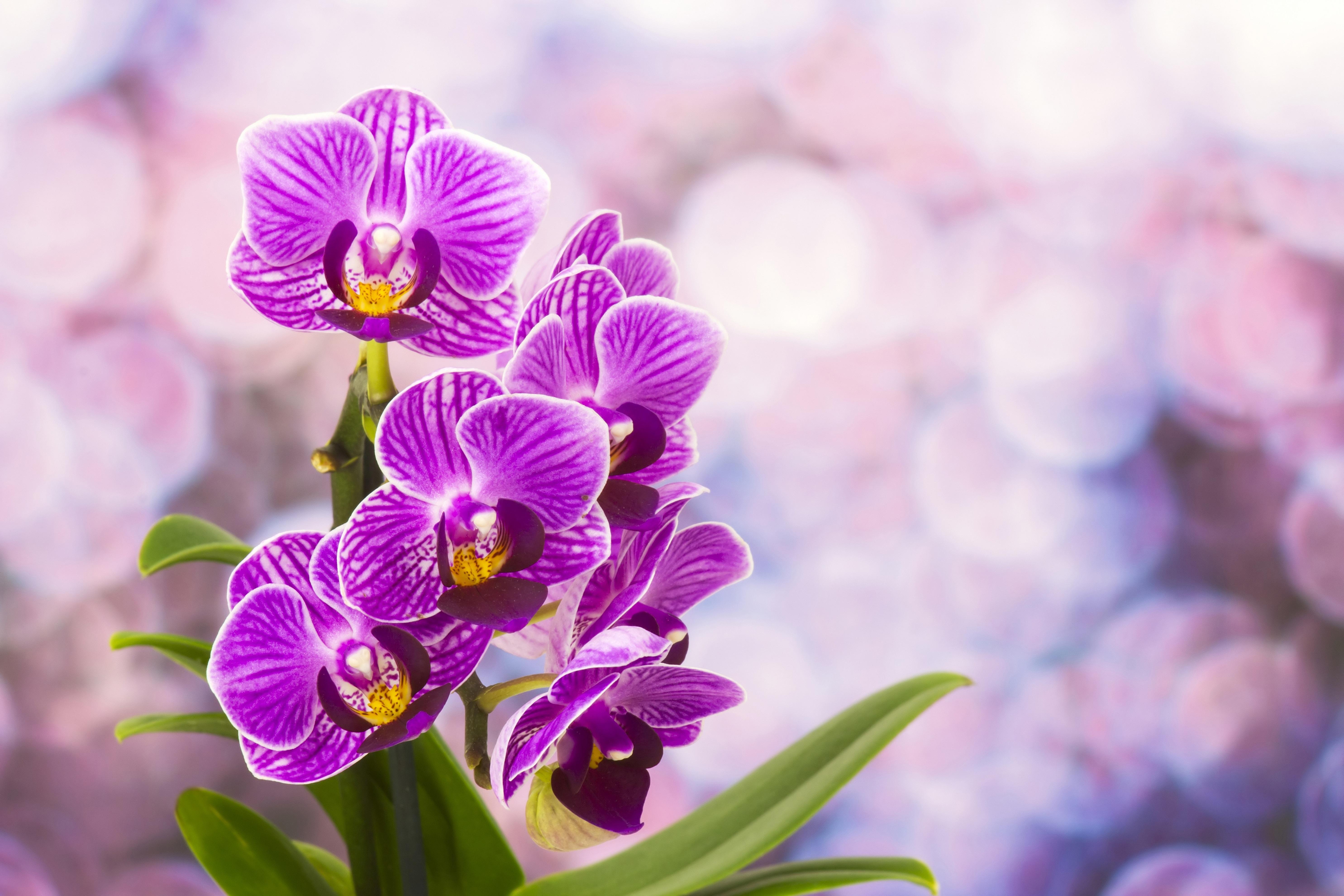 Днем автомобилиста, красивая открытка орхидеи