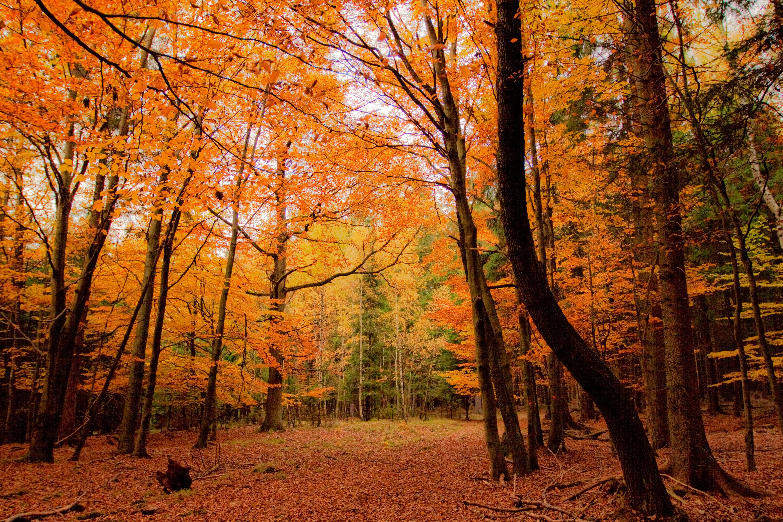 предприятия картинки осеннего леса высокое разрешение том, как отделить