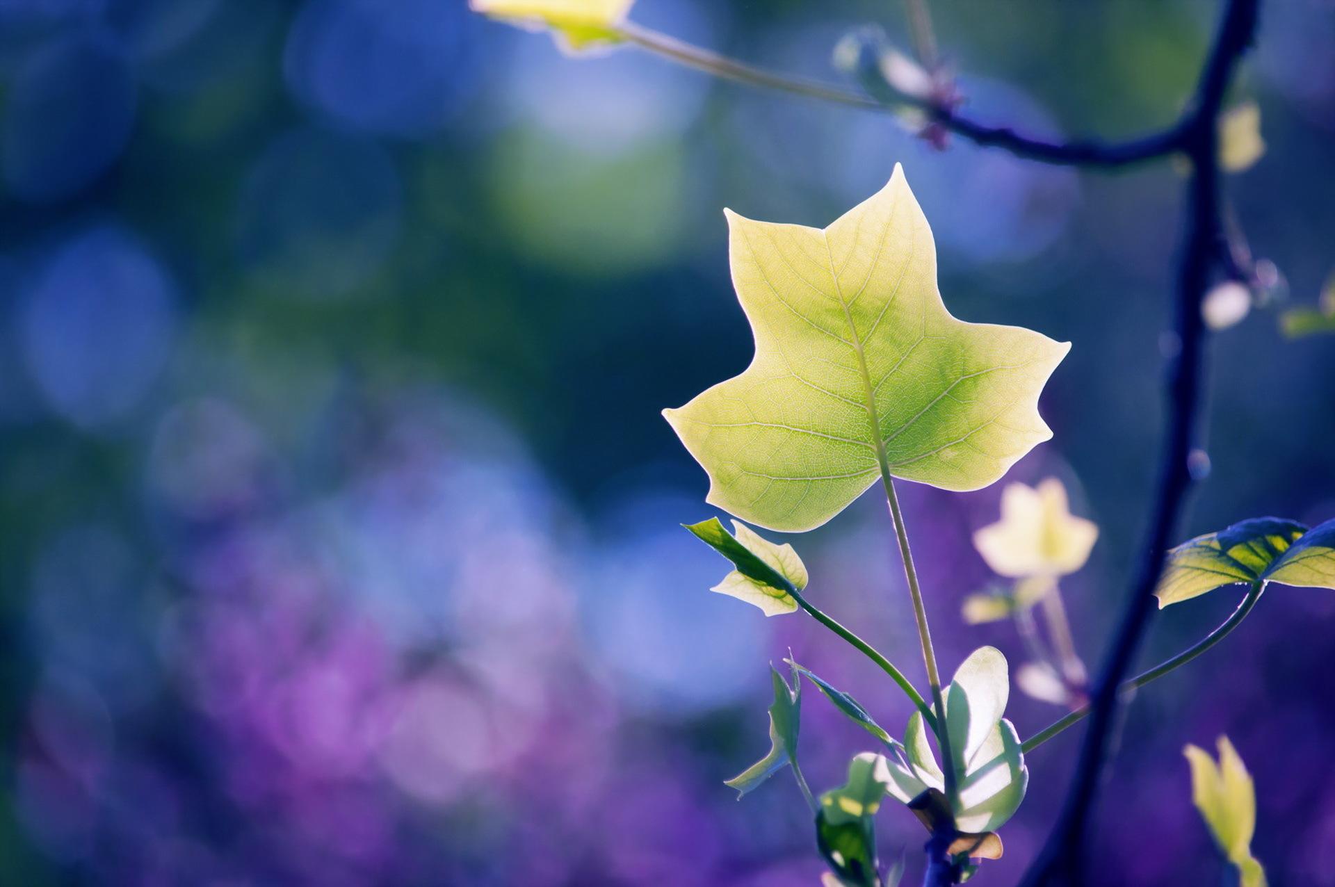 природа ветка листья nature branch leaves  № 2234  скачать