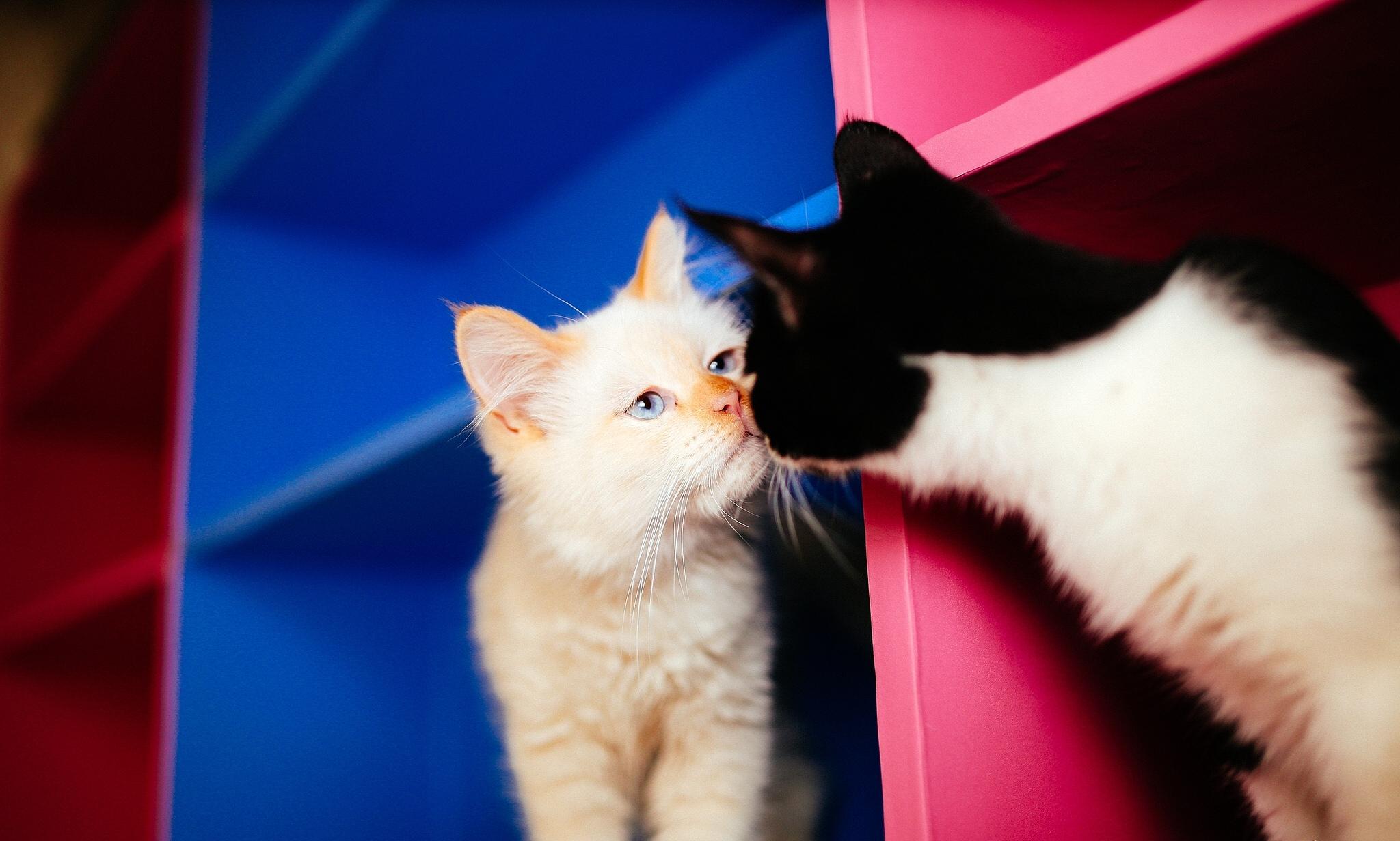 котов необычные знакомства