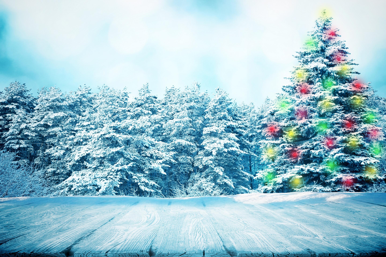 Новый год фото красивые природа, ежиками