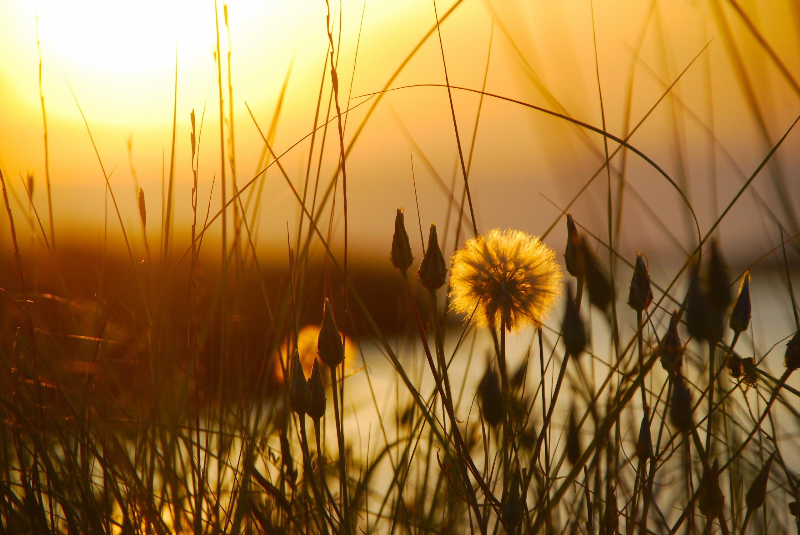 закат трава цветы озеро загрузить