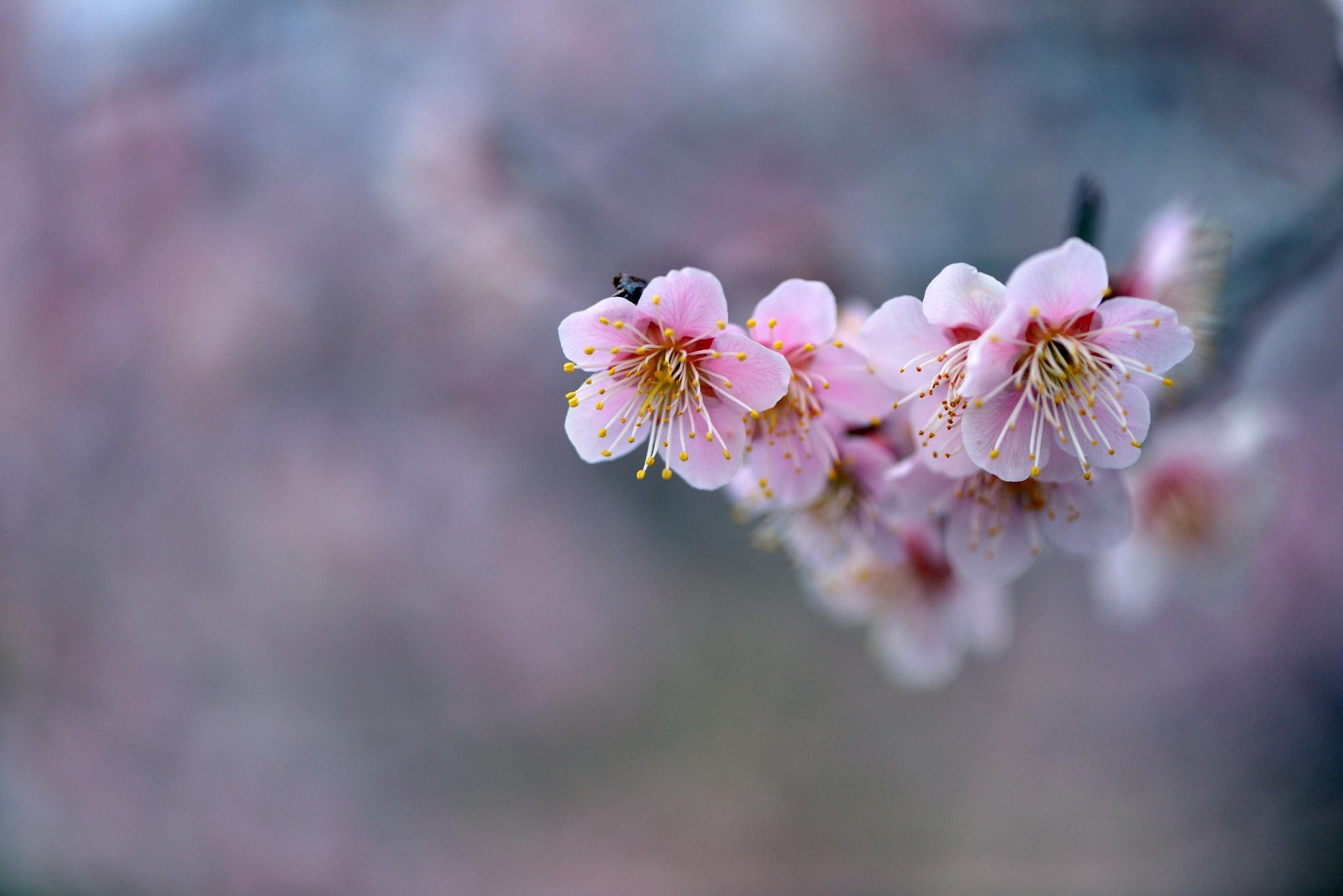 красивая ветка с цветами картинки да