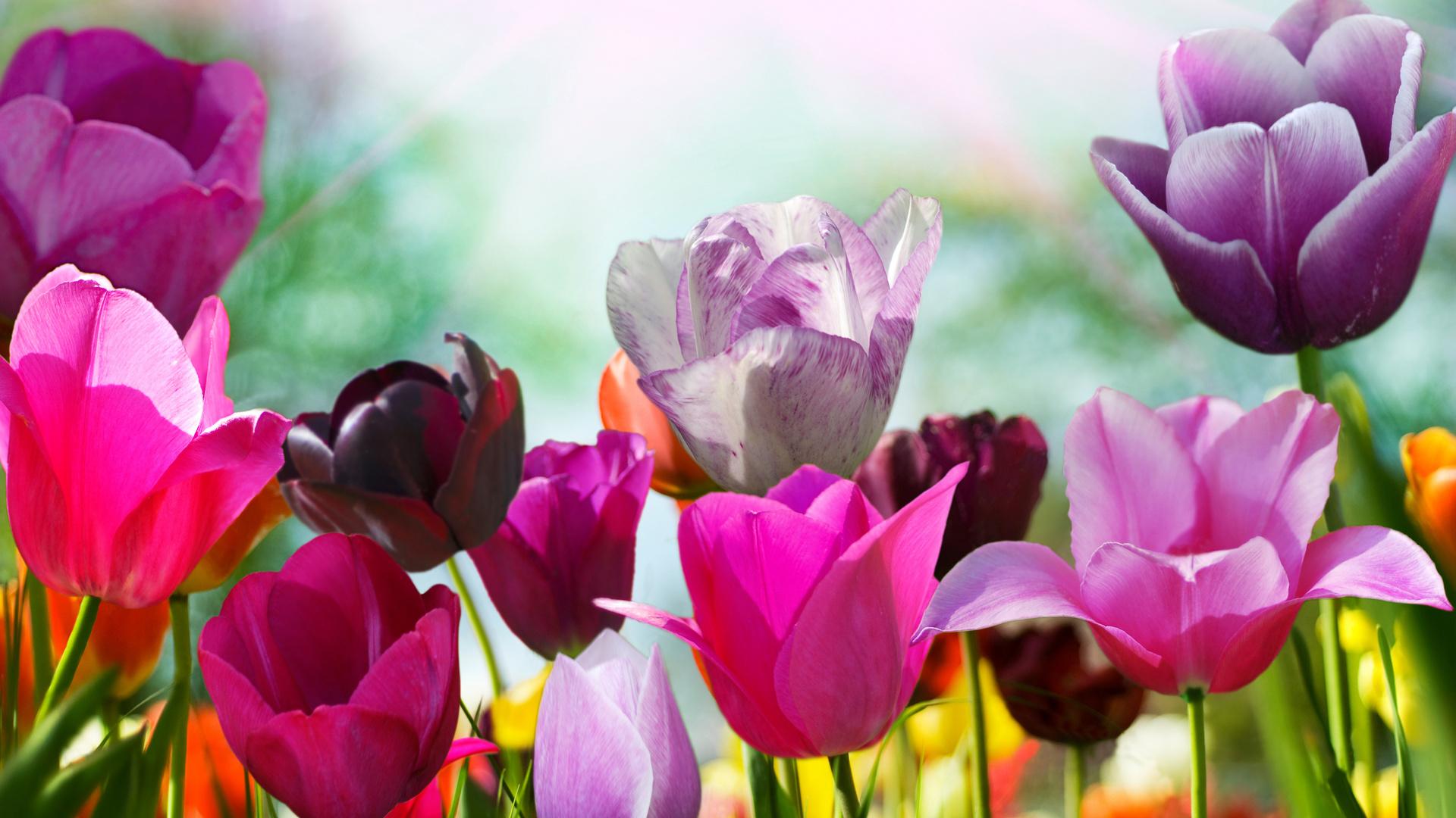 Цветы высокое разрешение — pic 10