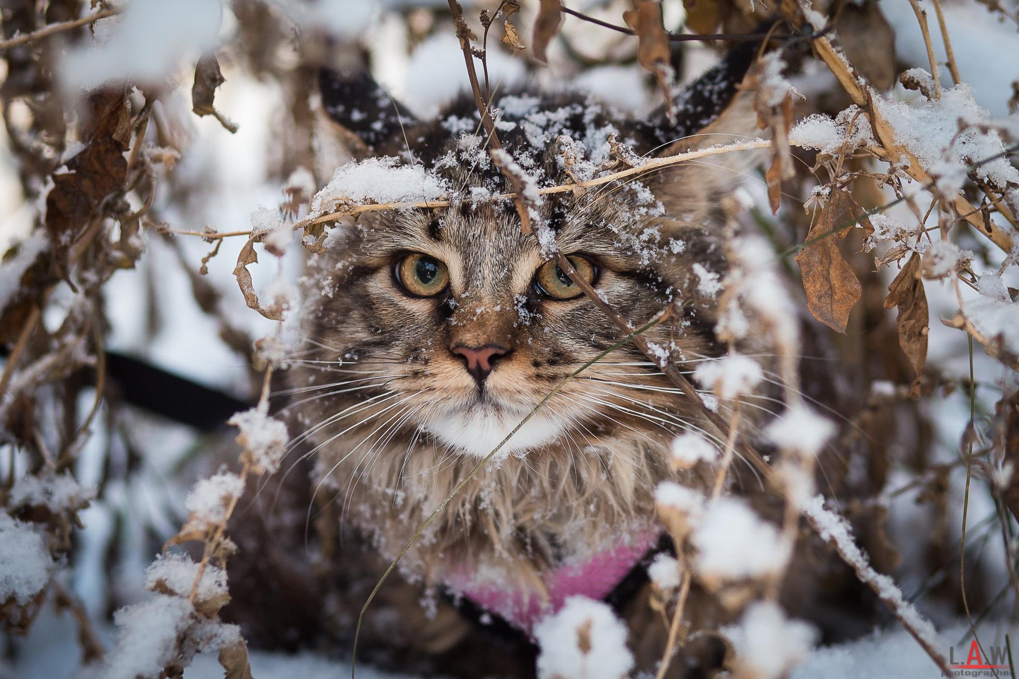 помещения сочетаются картинки кошек зимние завершення ферми дерева