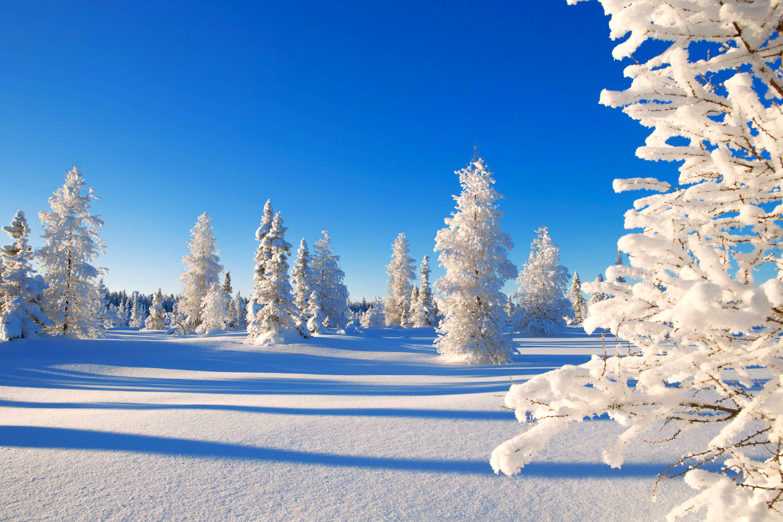 природа снег ели лес зима без смс