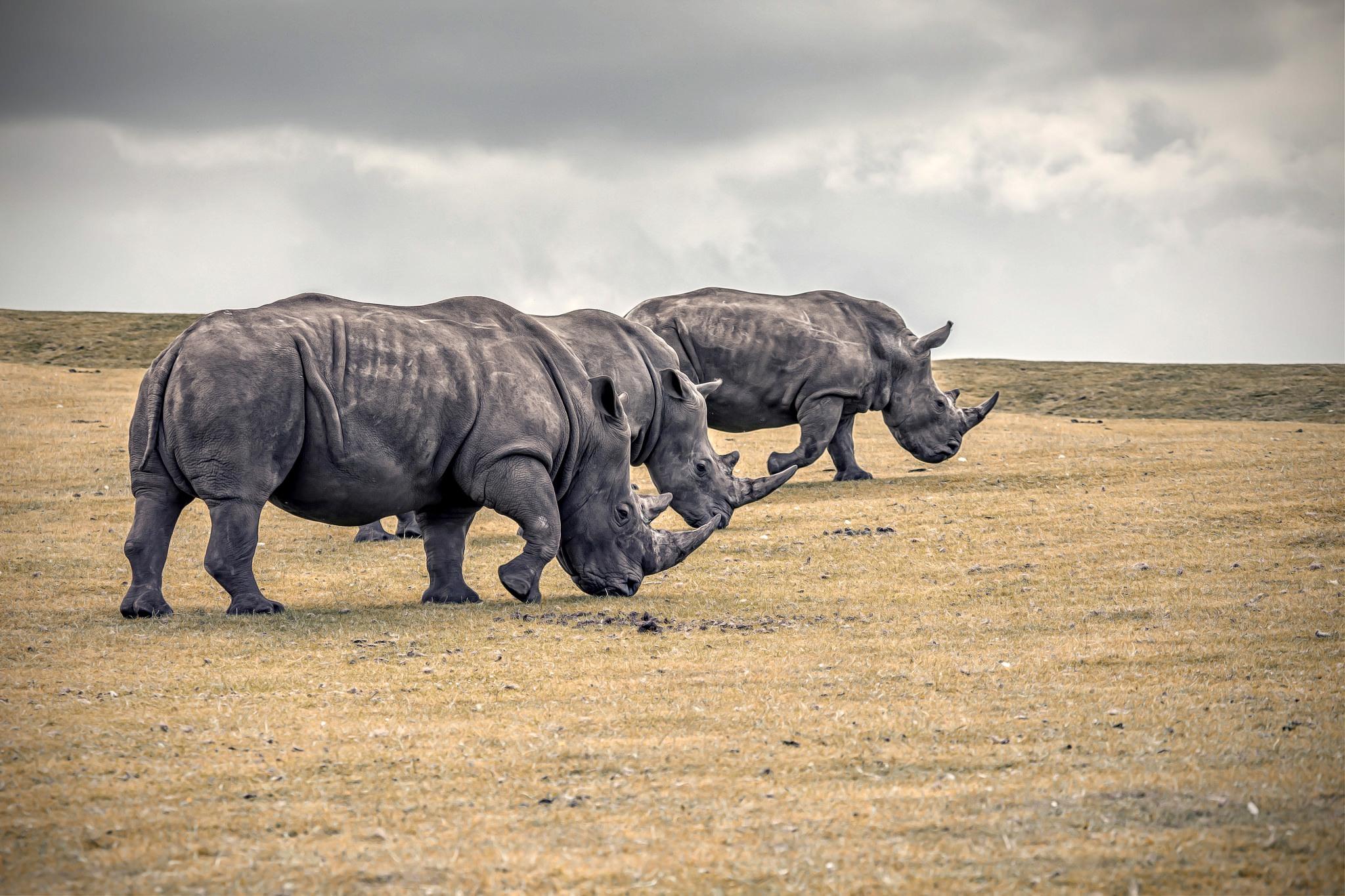 нашем в дании носороги не водятся видео зависимости ваших