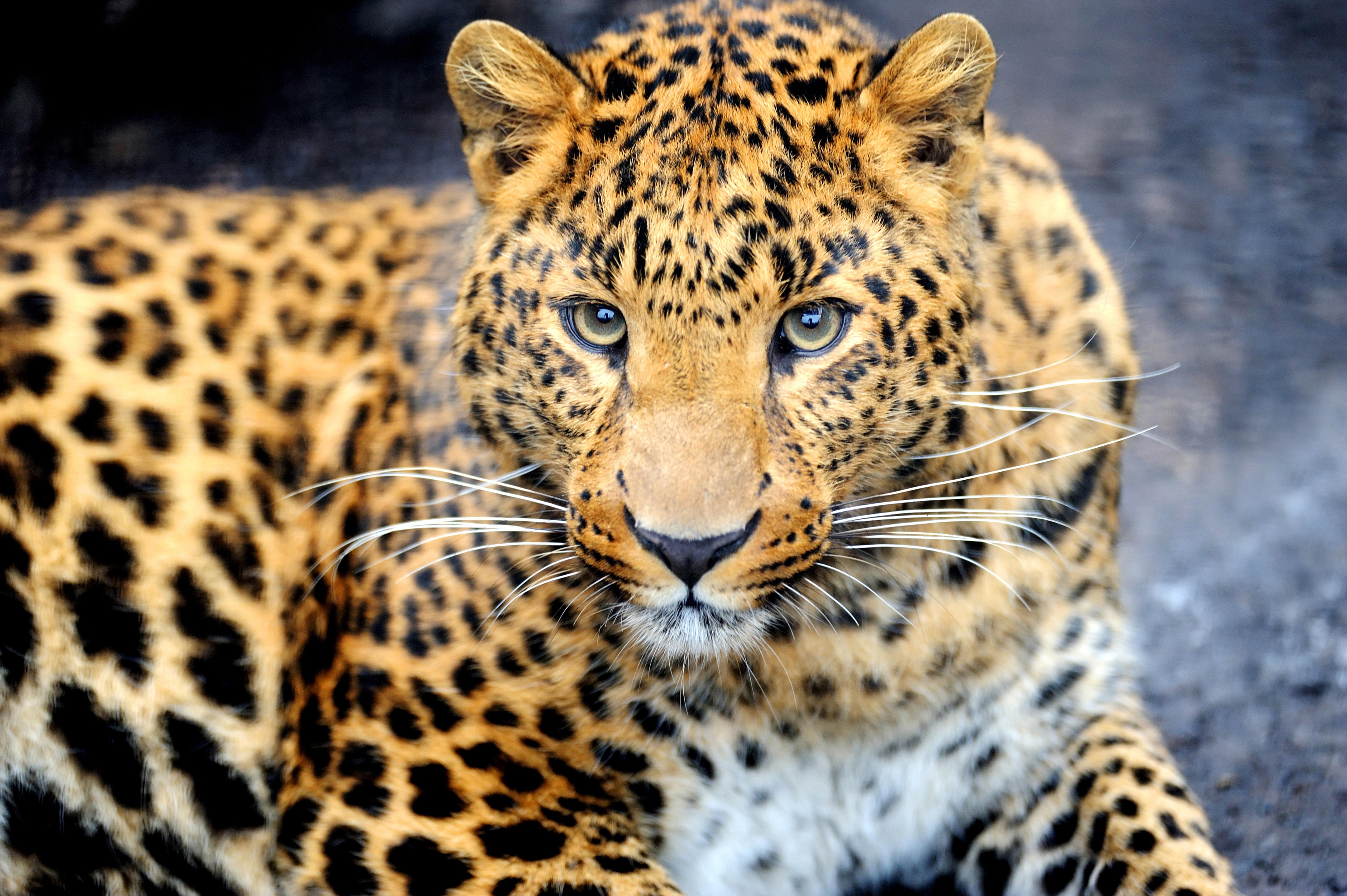 Фото животных в хорошем качестве и разрешении
