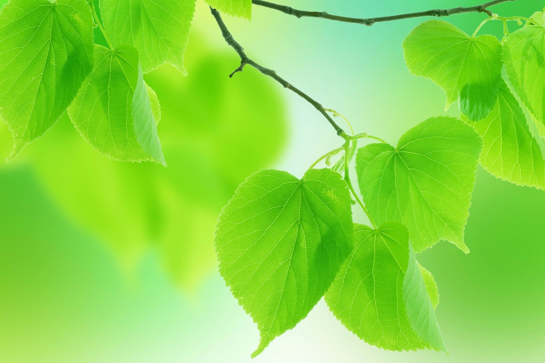 ветка с листьями  № 3792404 загрузить
