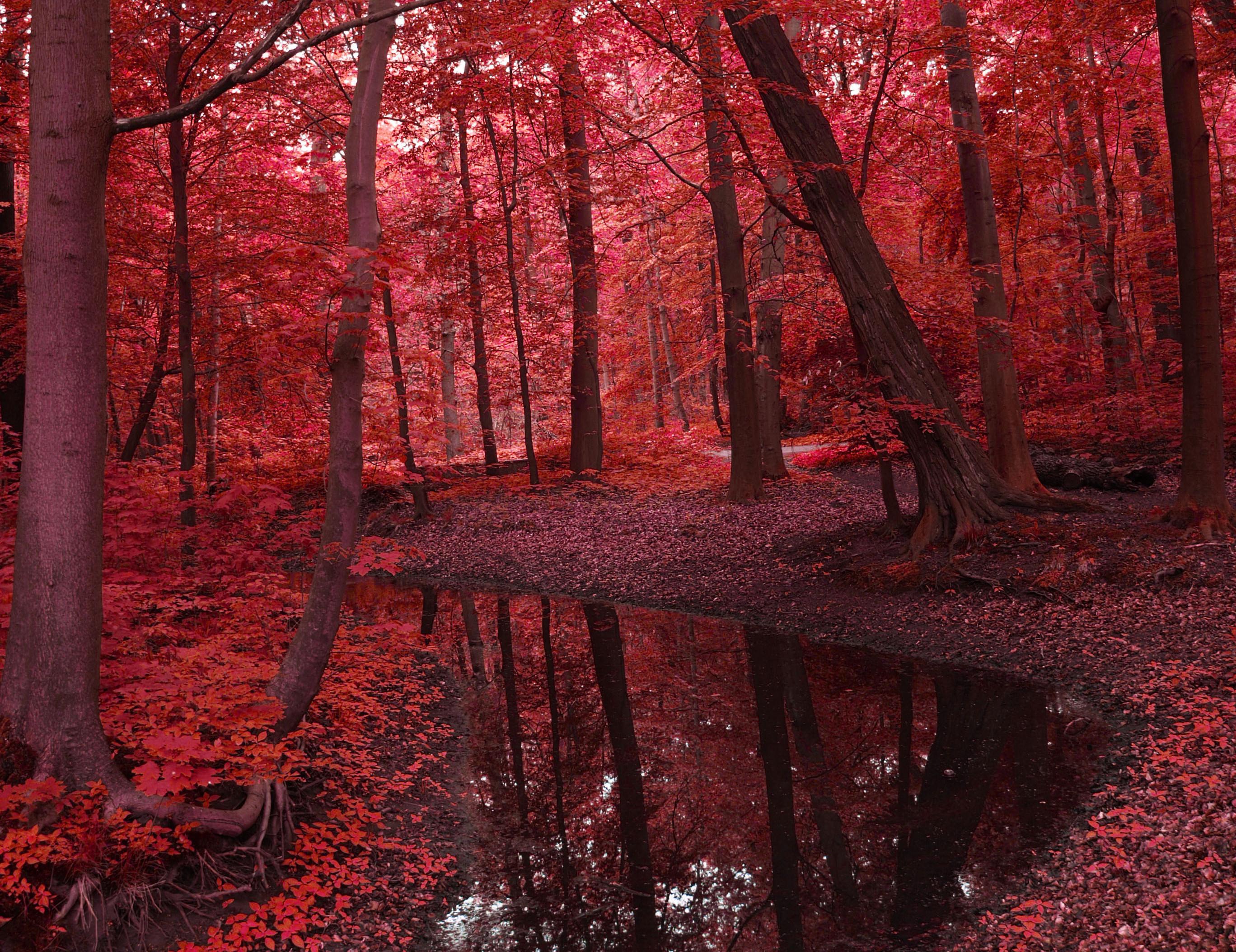 вачковски фото красной осени есть