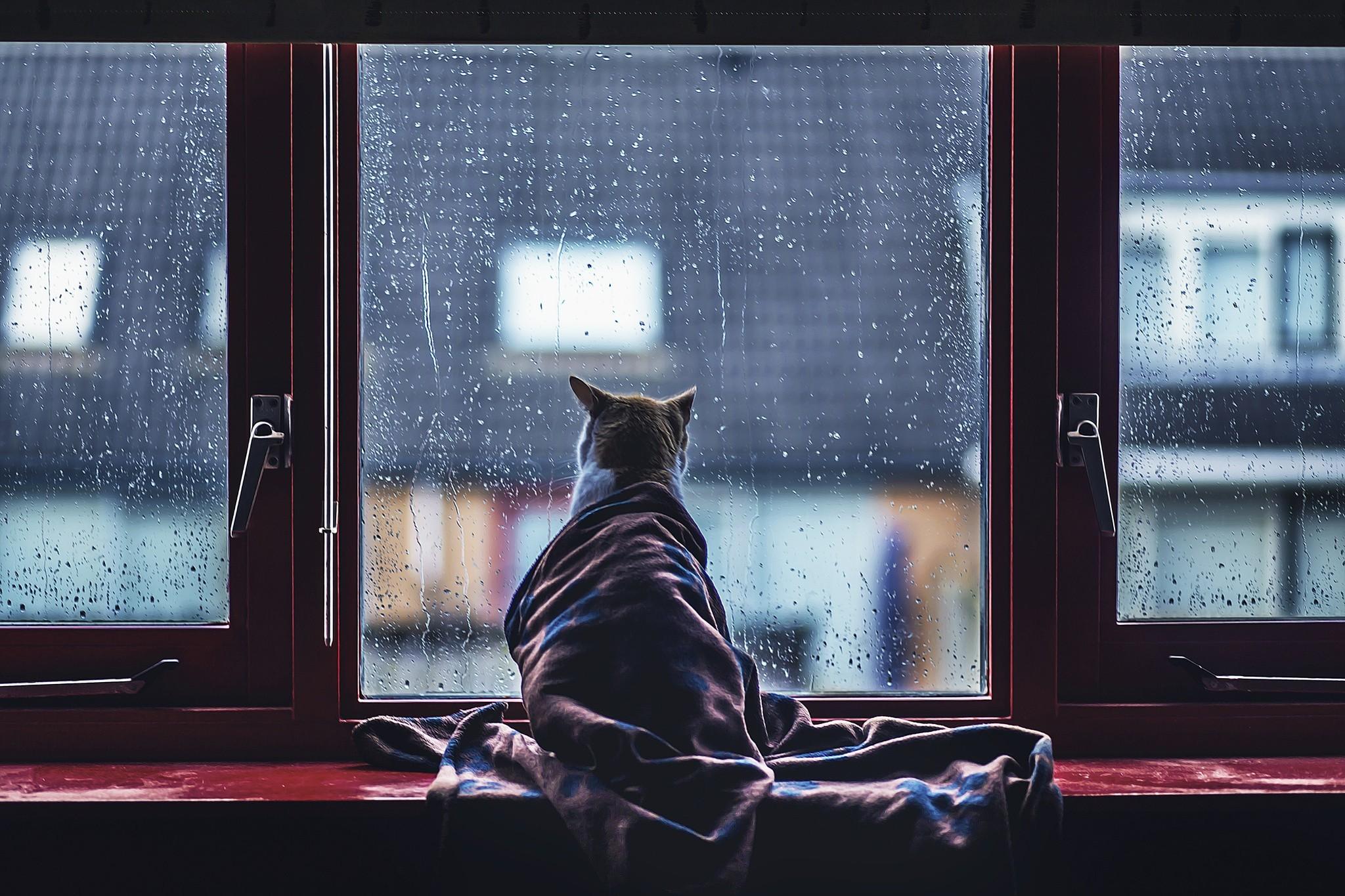 Пес ожидание у окна  № 1941289 без смс