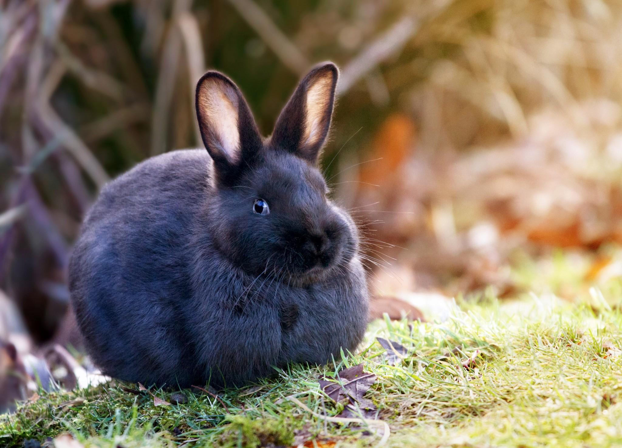 испуганный кролик  № 367626  скачать