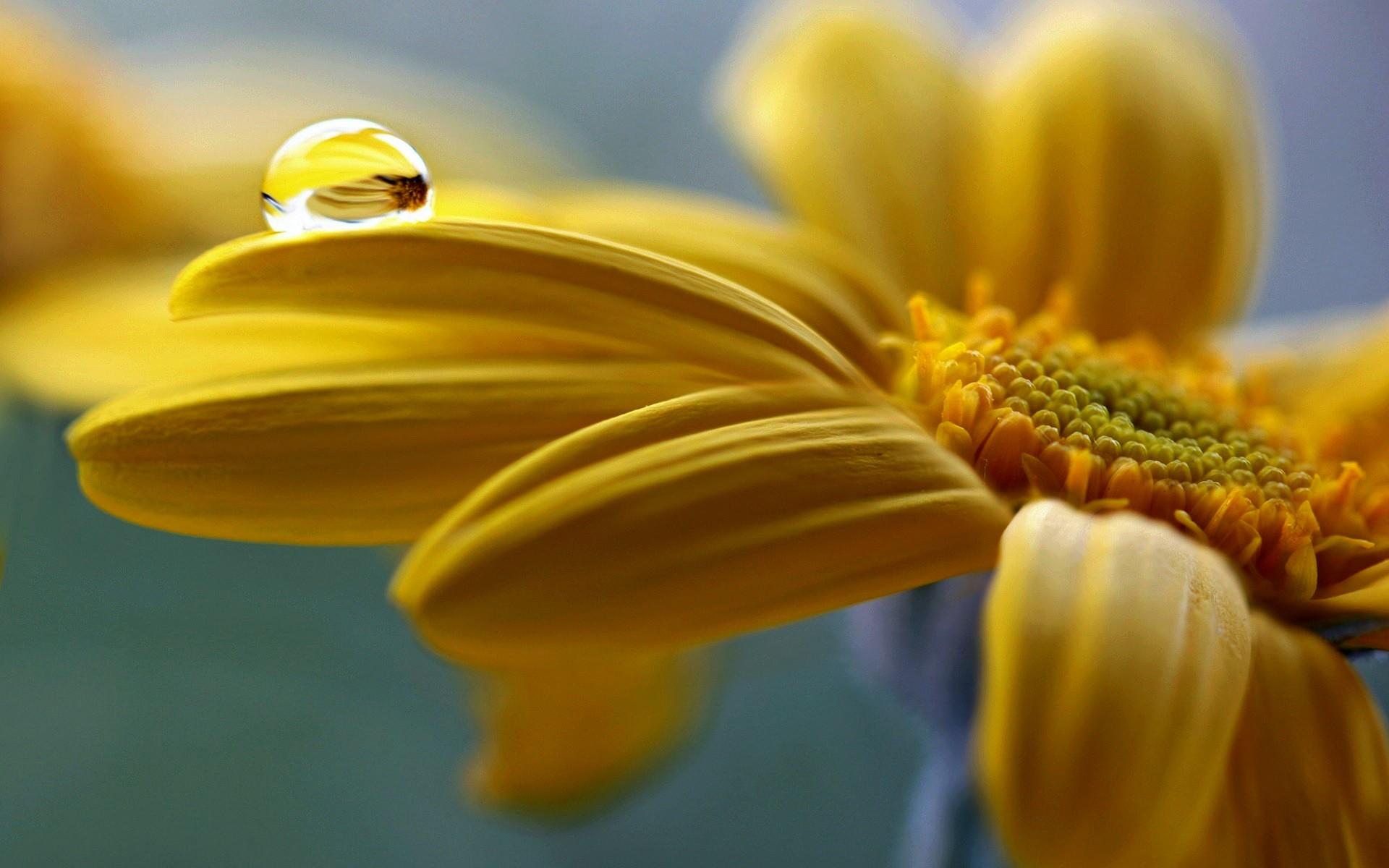 цветы макро желтые flowers macro yellow  № 910203  скачать