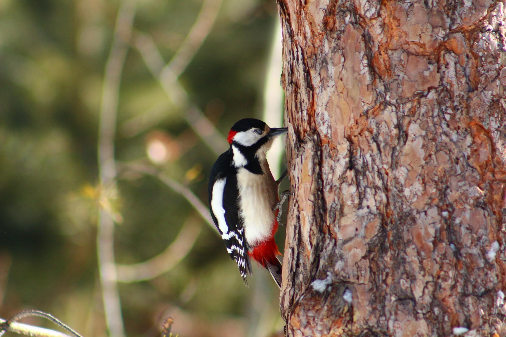 картинки птиц нашего леса никто, чтоб перечил