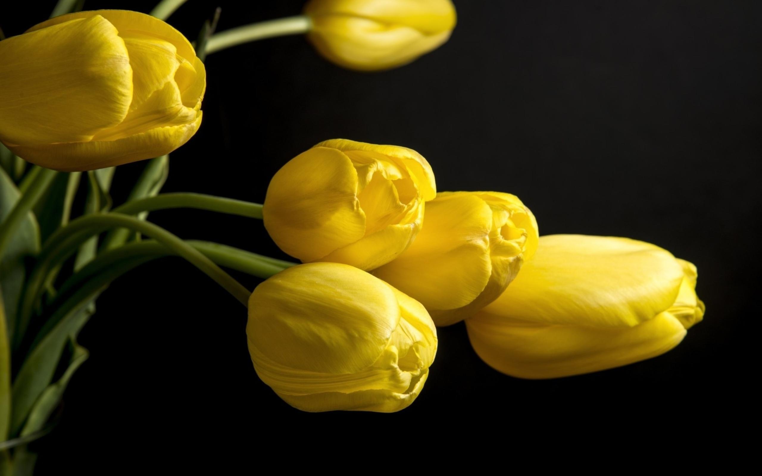 Картинки желтый цветок на темном фоне