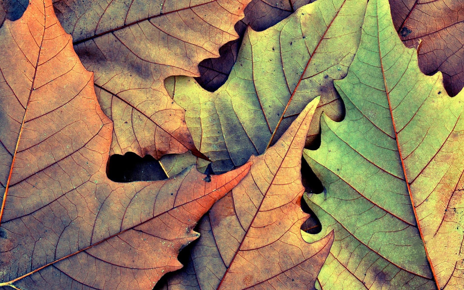 Листья осень ткань бесплатно
