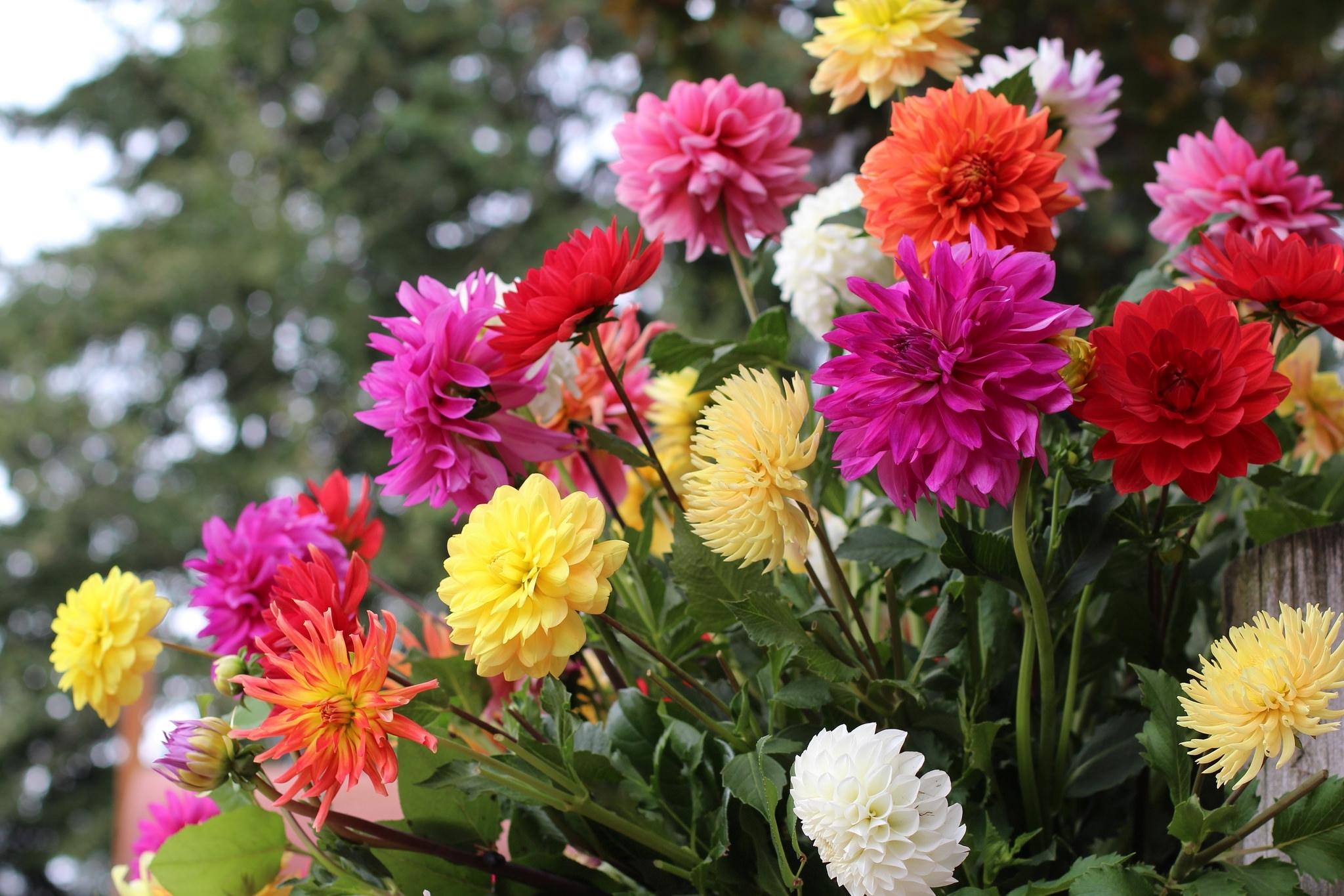 Колосками, цветы осени картинки на рабочий стол