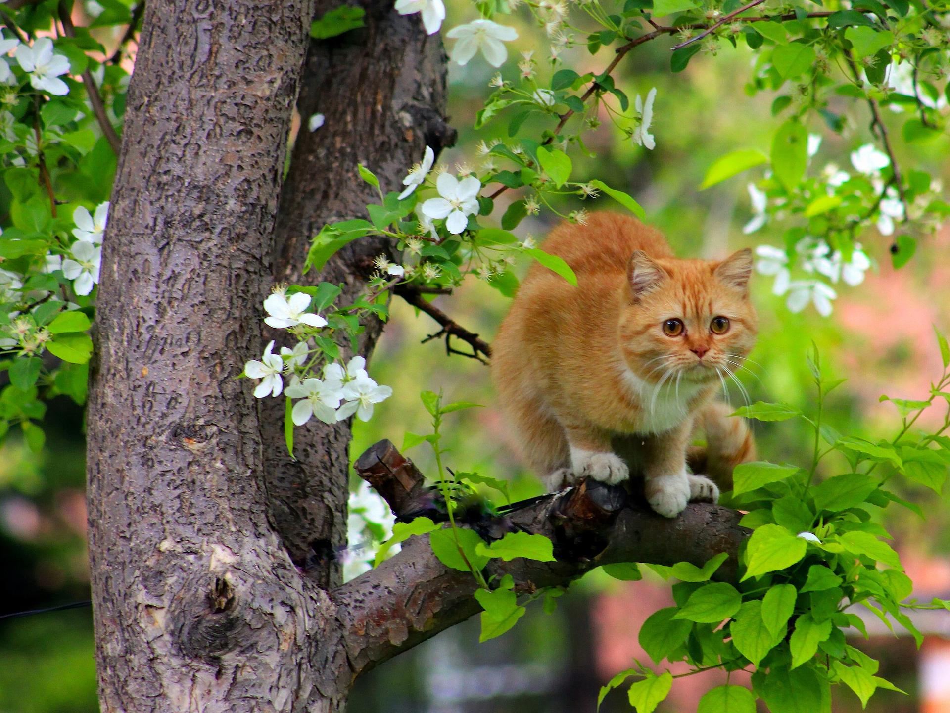 природа животные рыжий кот  № 941040  скачать