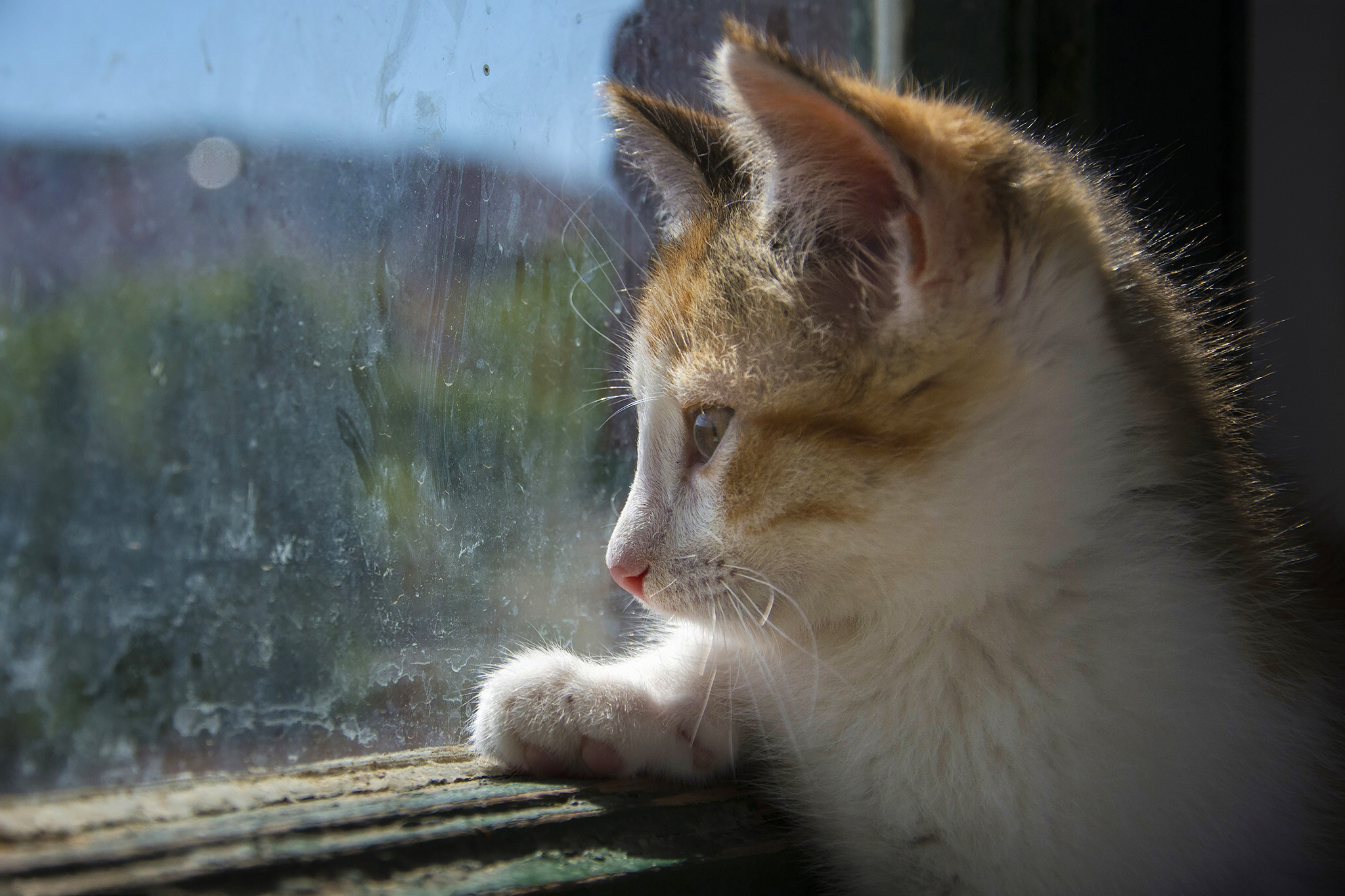 котята на окне kittens on the window  № 3063294  скачать