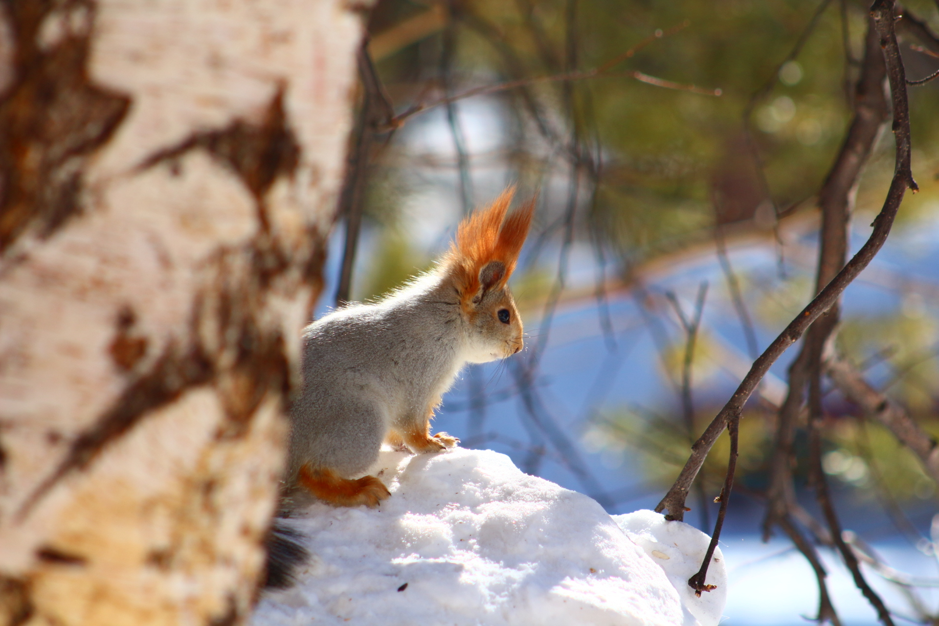 картинки весна животные на снегу это