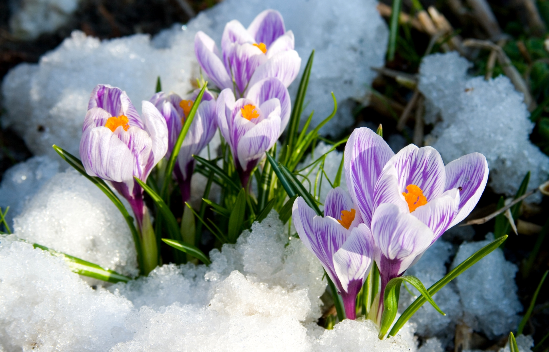 early spring images - HD1920×1233