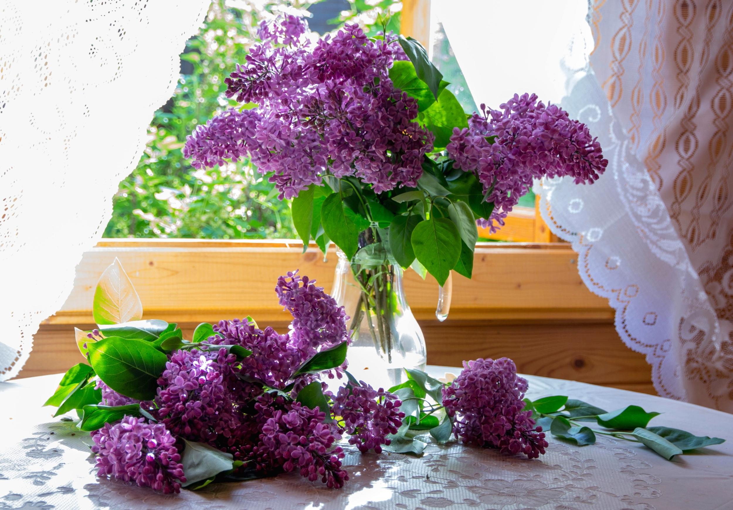 Цветы на окне в вазе без смс