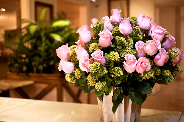 Все картинки и название цветковые сша курцхаара