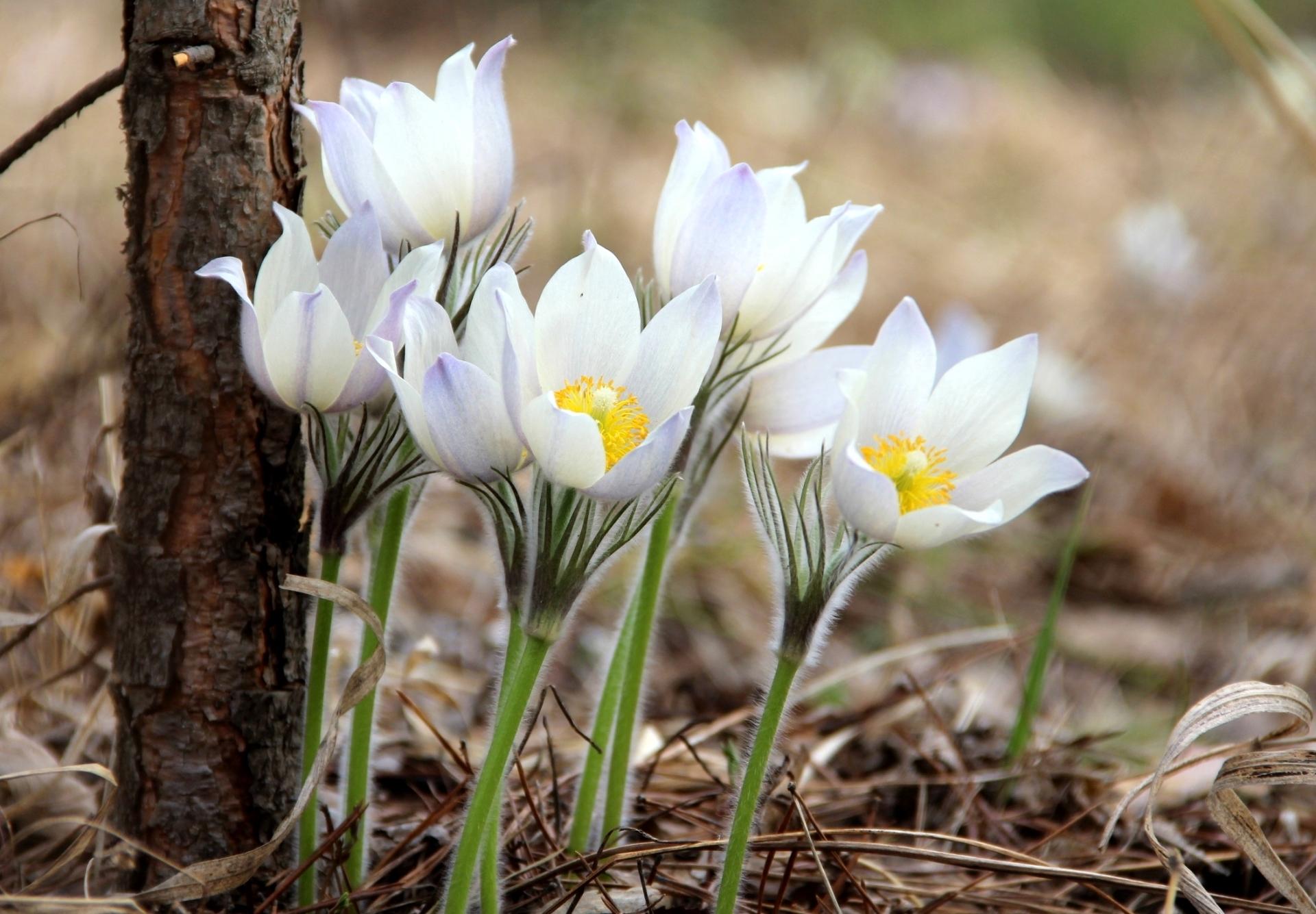загрузить весна картинки специя обладает