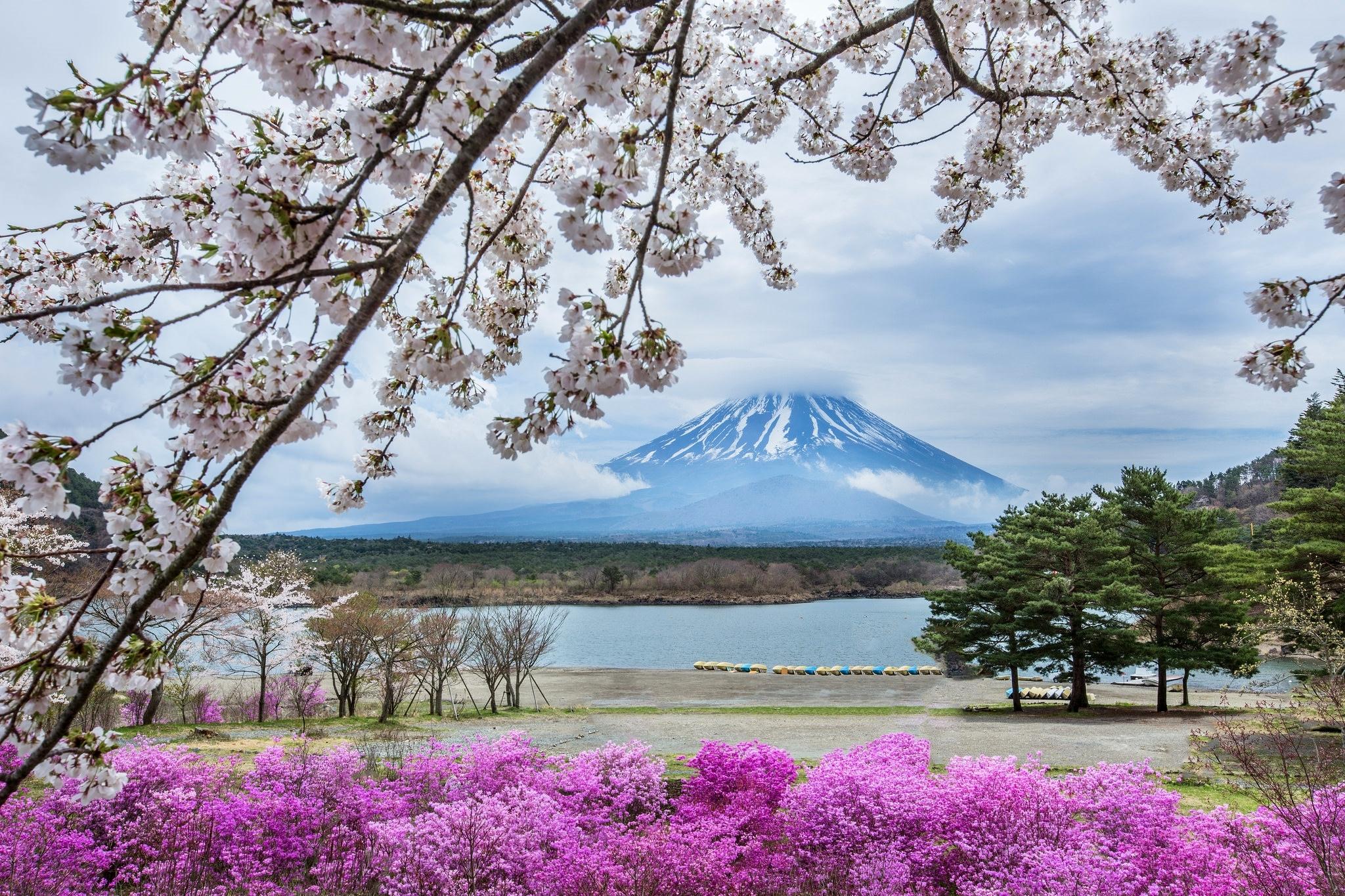 обои для рабочего стола весна япония № 60188 бесплатно