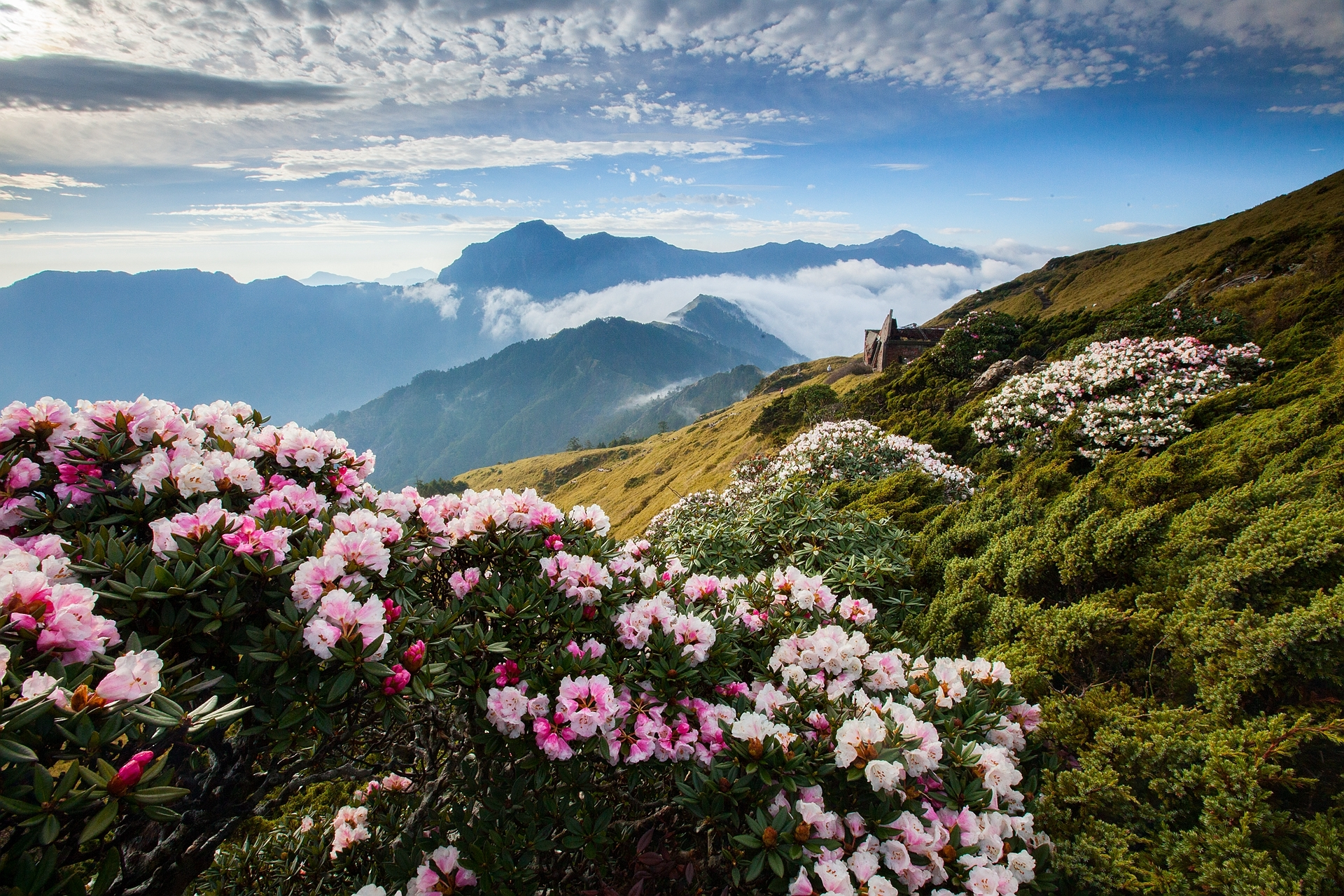 цветущие горы картинка больше