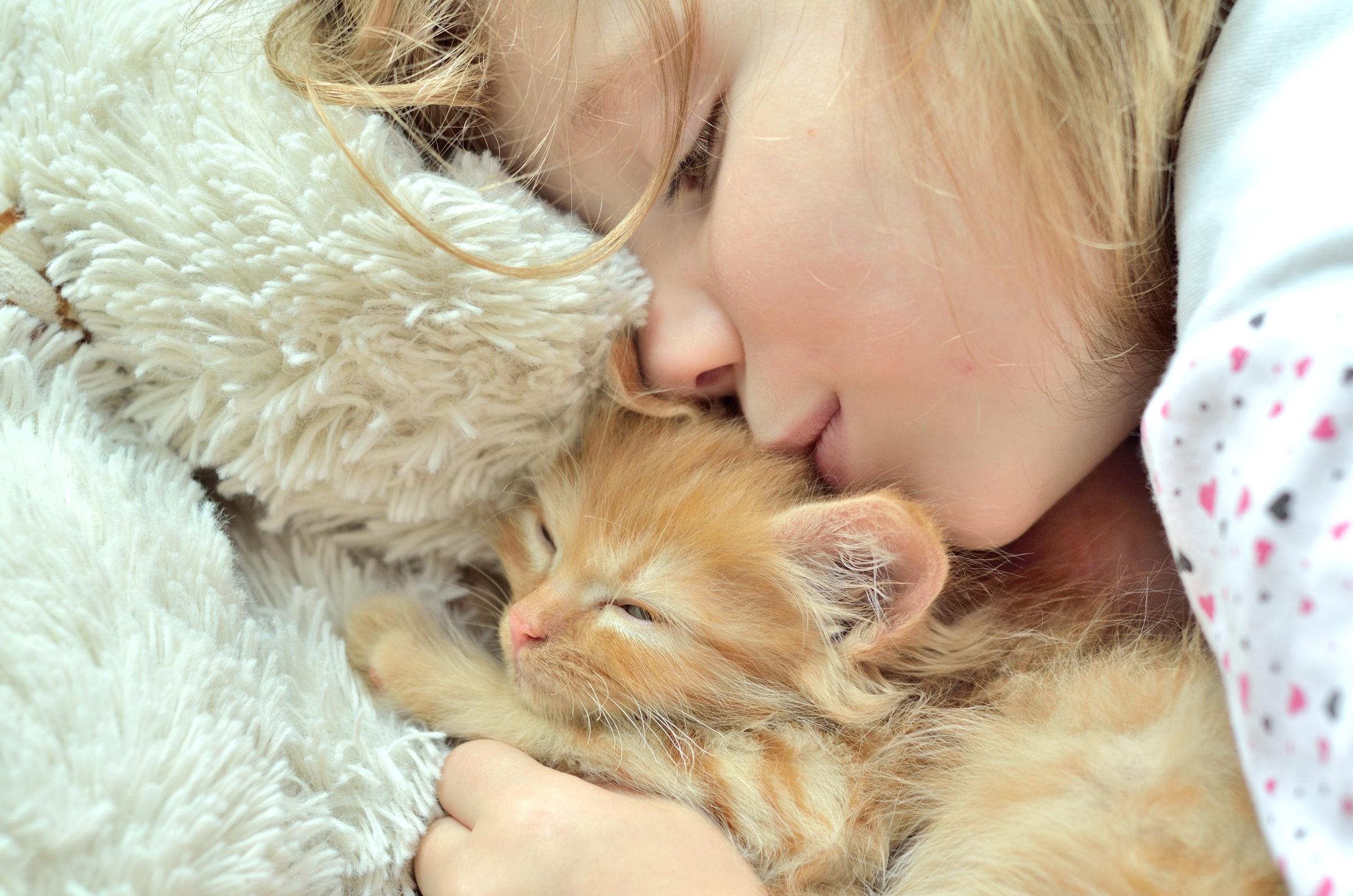 Картинки котят с человеком