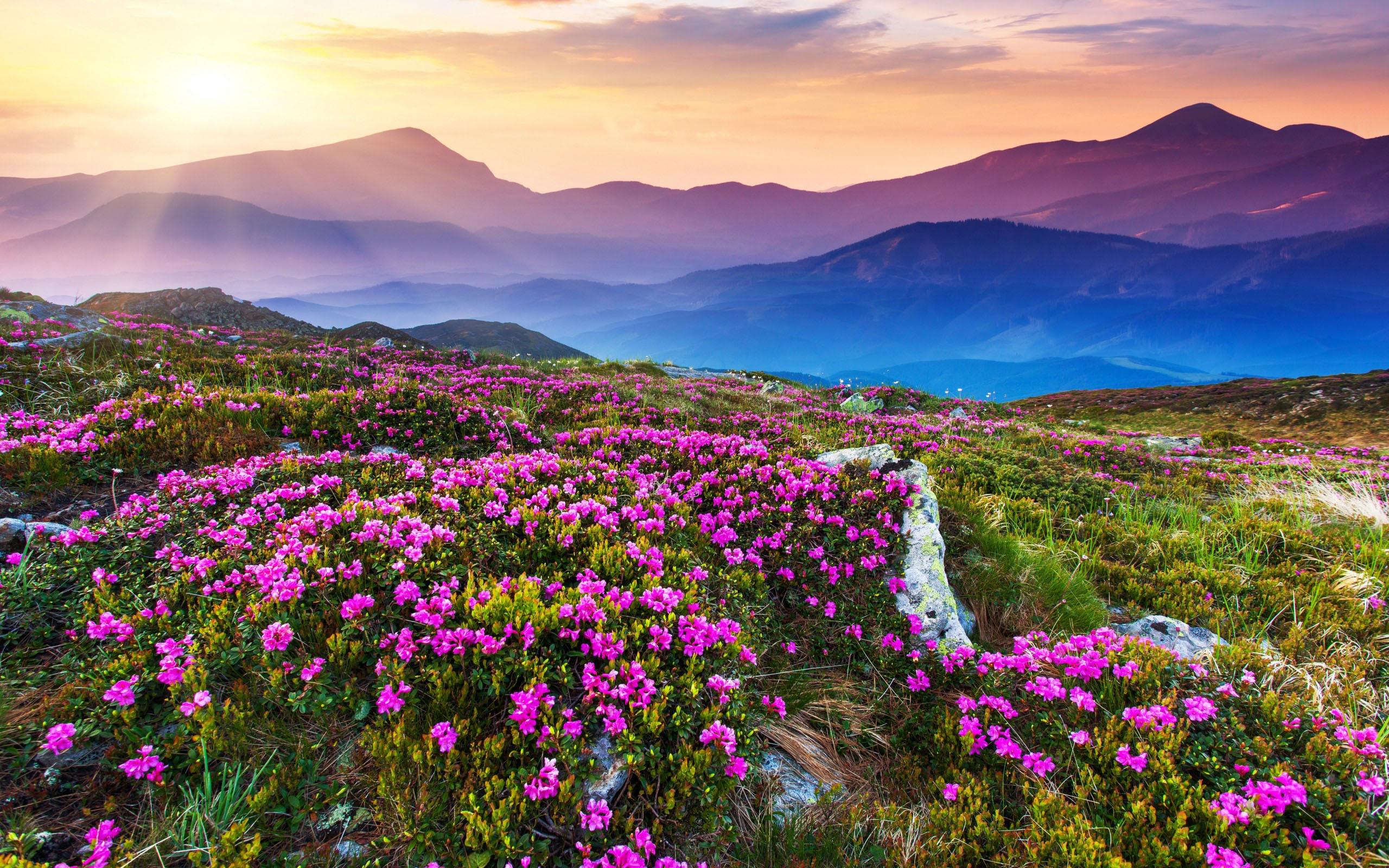 помолвке цветущие горы картинка зал