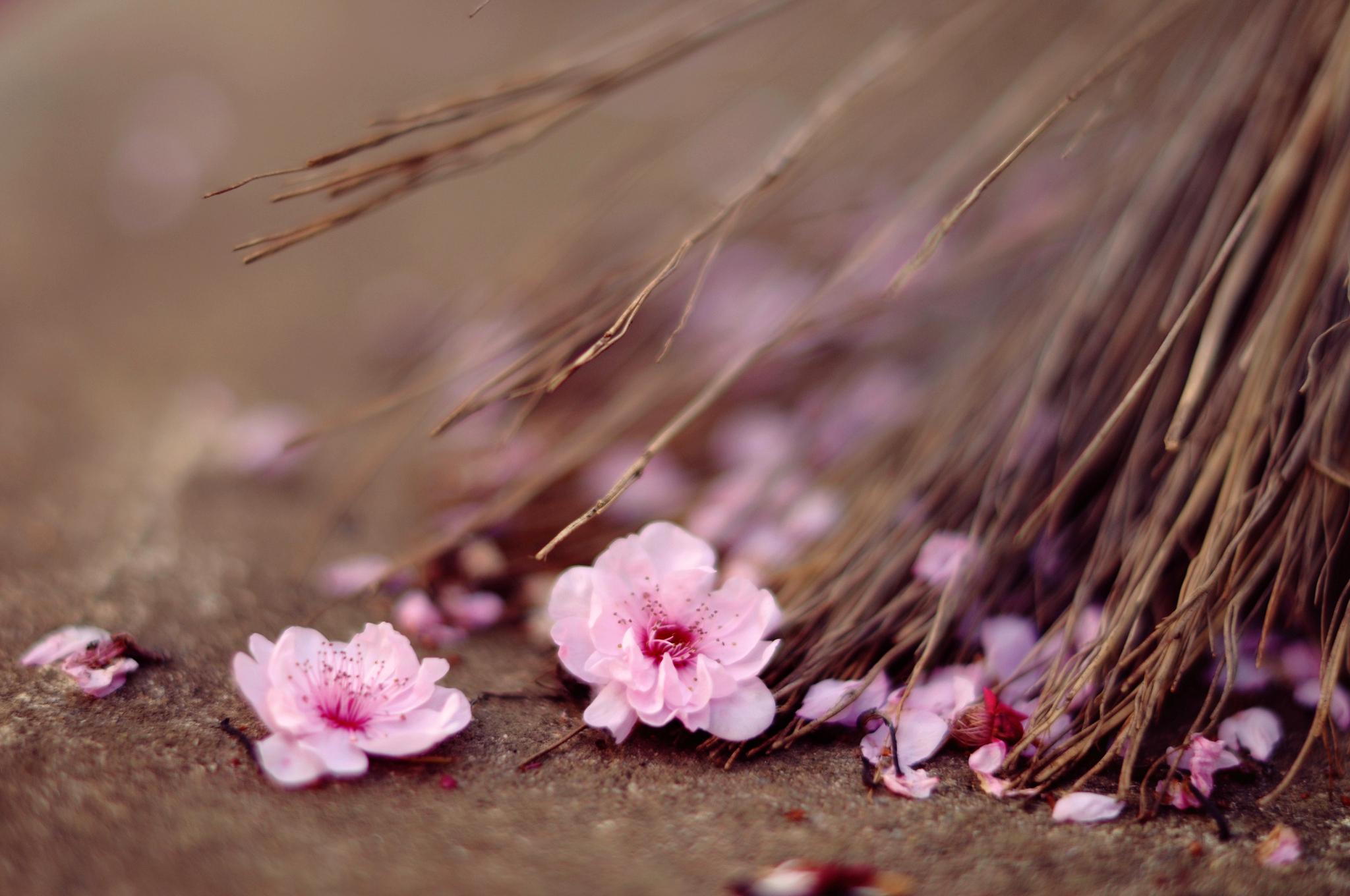 Открытка вконтакте, картинка нежные цветы красные