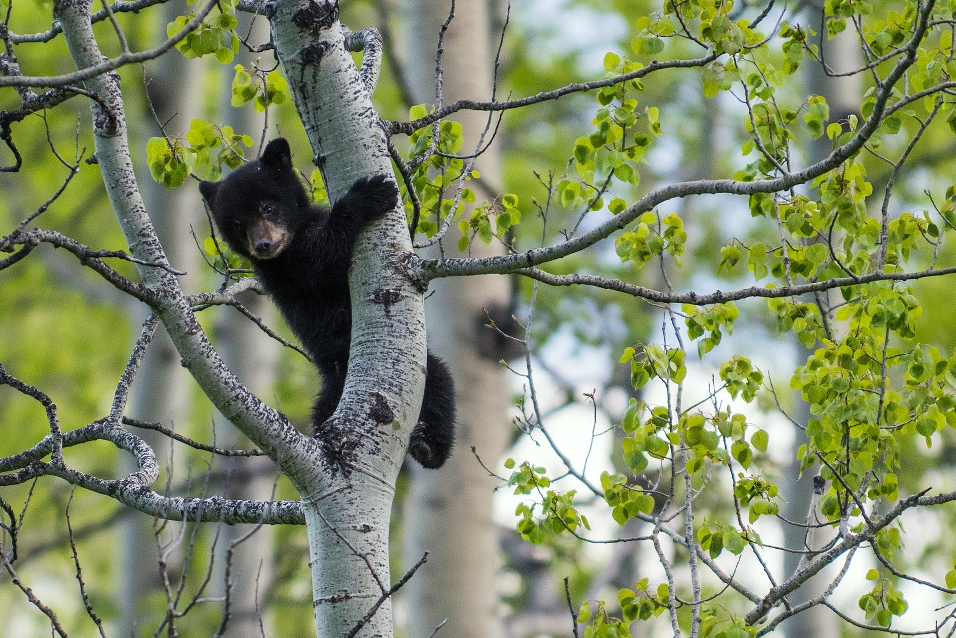 bear branch big and beautiful singles 55 houses in bear branch from $115,000 find the best offers for properties in bear branch property with loads of wildlife of deer, turkey, bear, coon, rabbits, squirrel and more7 gas.