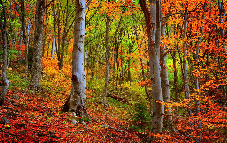 красивые картинки леса осеннего этот вечер